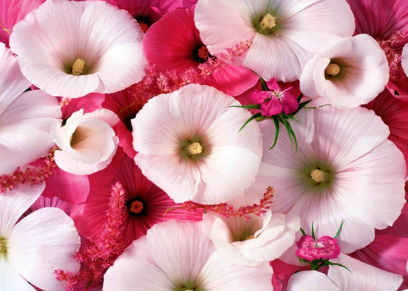Images of beautiful flower wallpapers