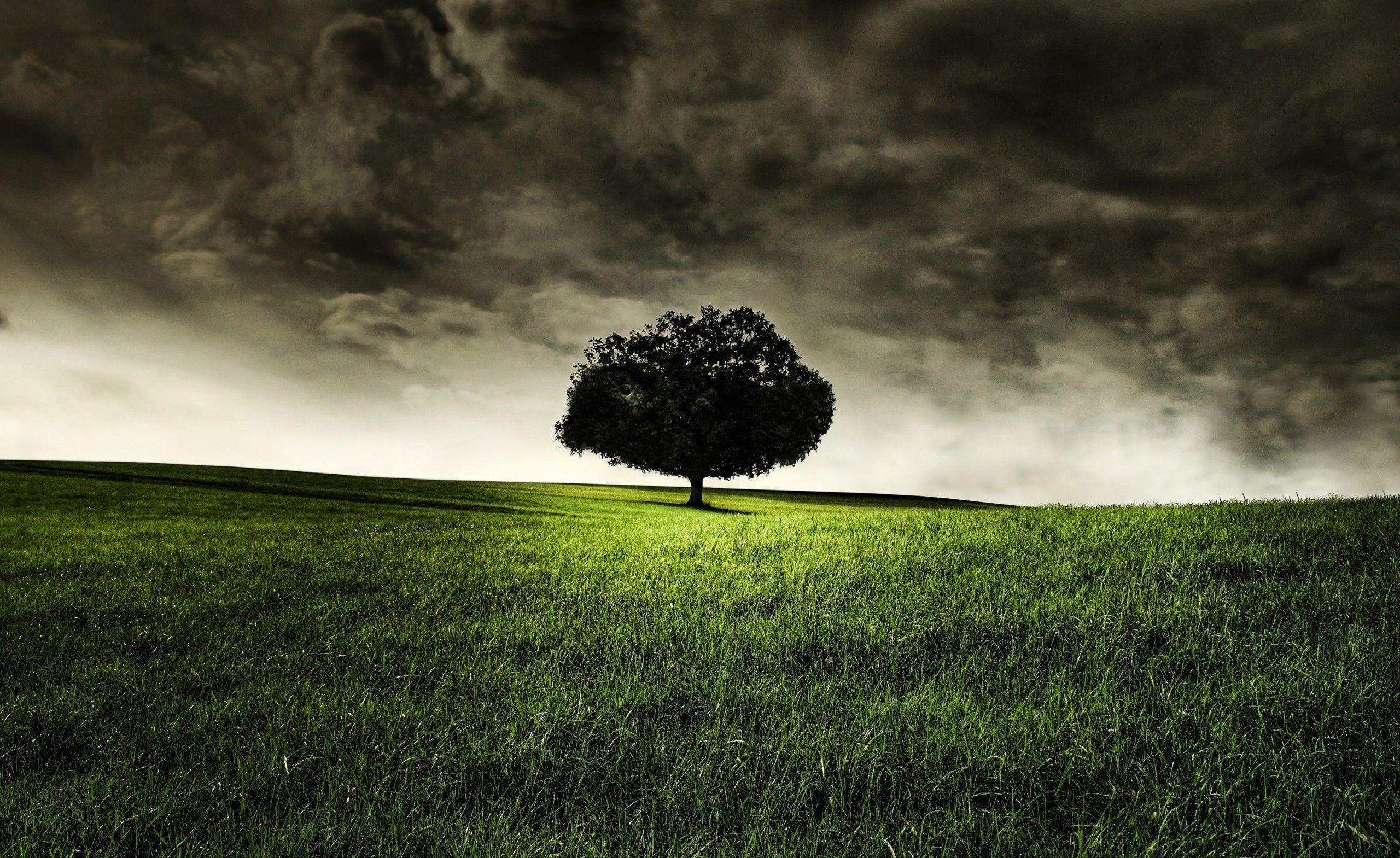 Dark Nature Wallpapers Top Free Dark Nature Backgrounds