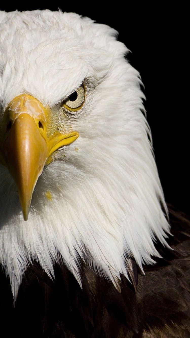 70 Best Free American Eagle Desktop Wallpapers ...
