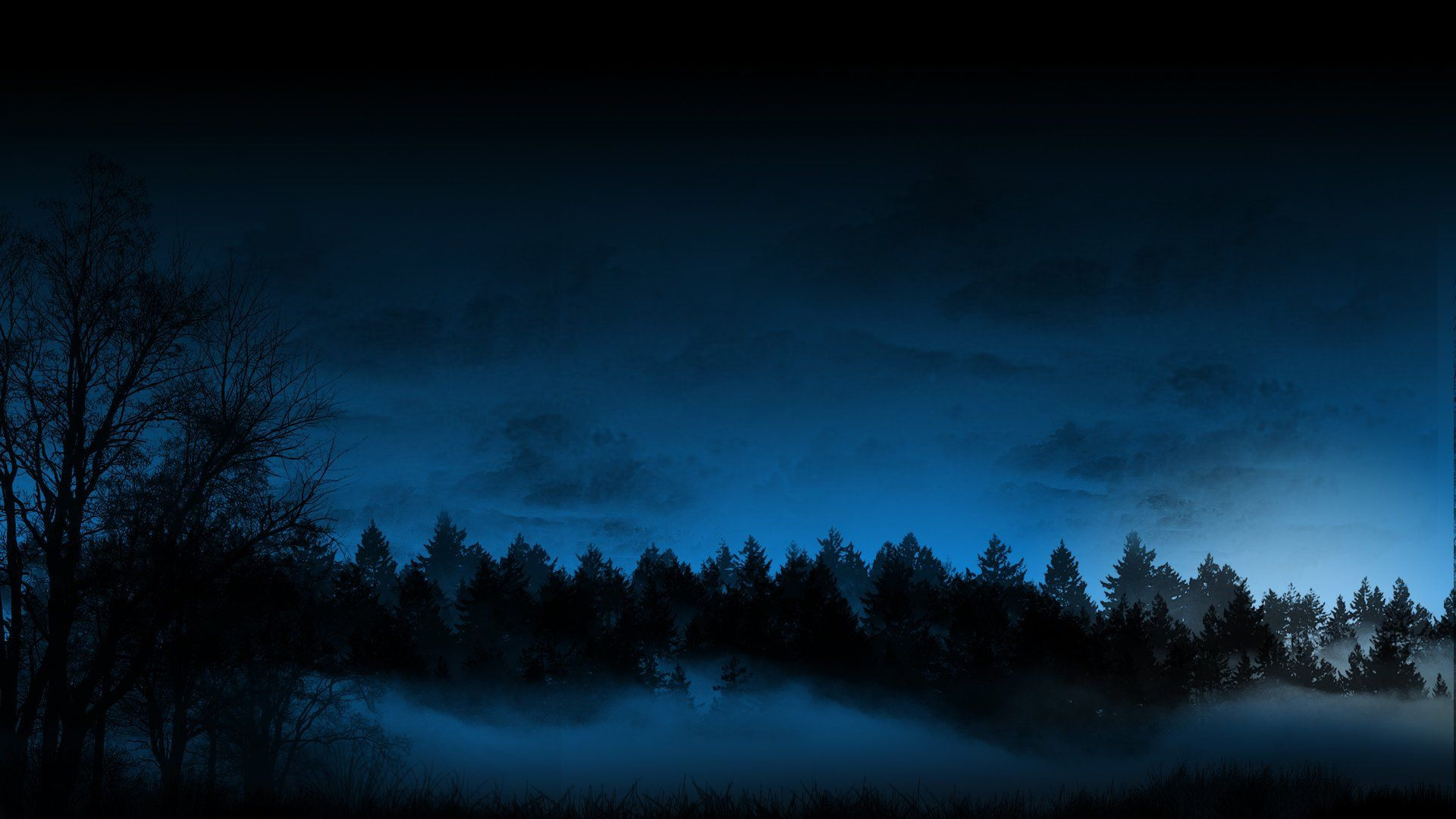 Night Forest Wallpapers Top Free Night Forest Backgrounds