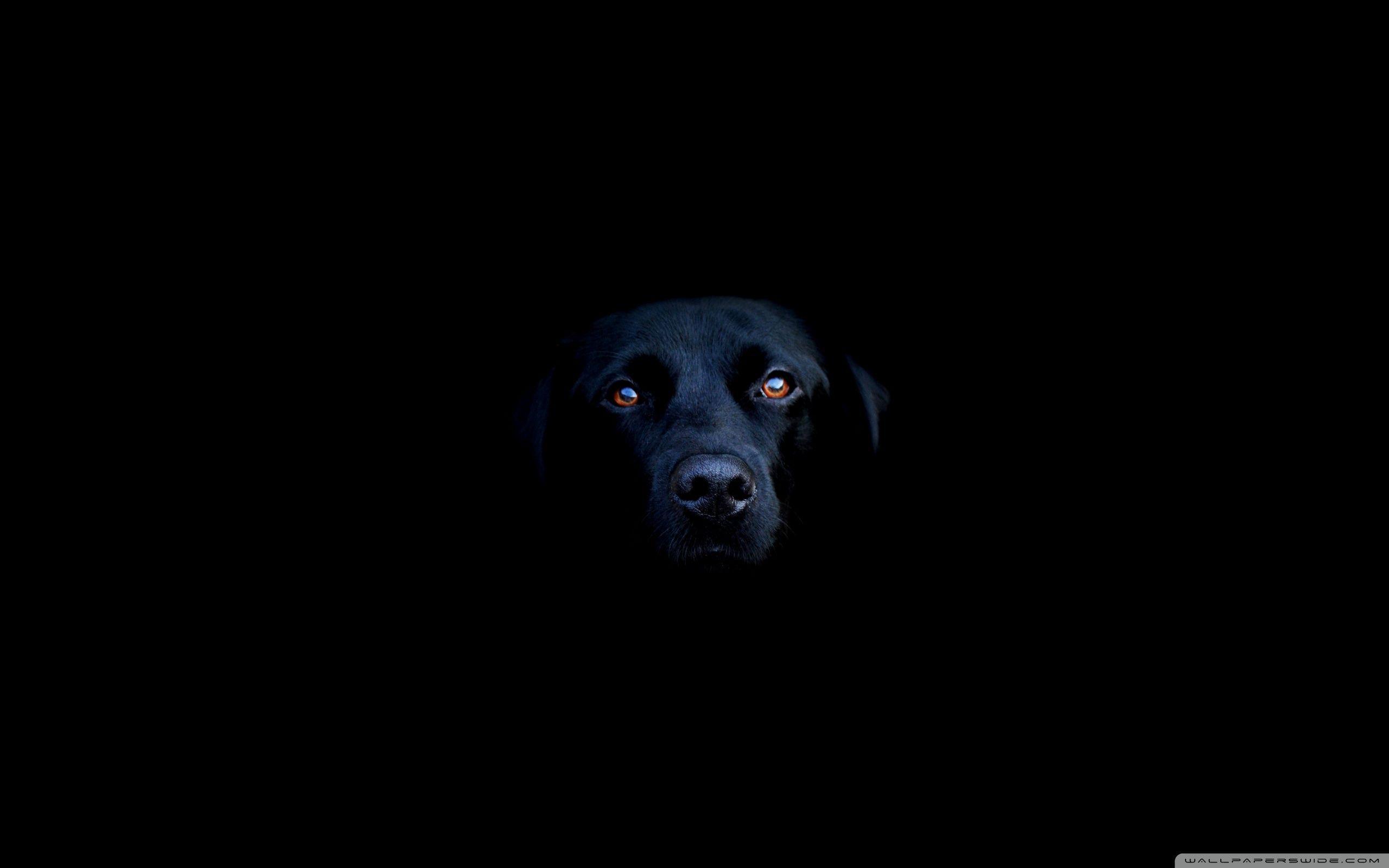 2560x1600 Black Dog ❤ Hình nền máy tính để bàn HD 4K cho TV 4K Ultra HD • Rộng
