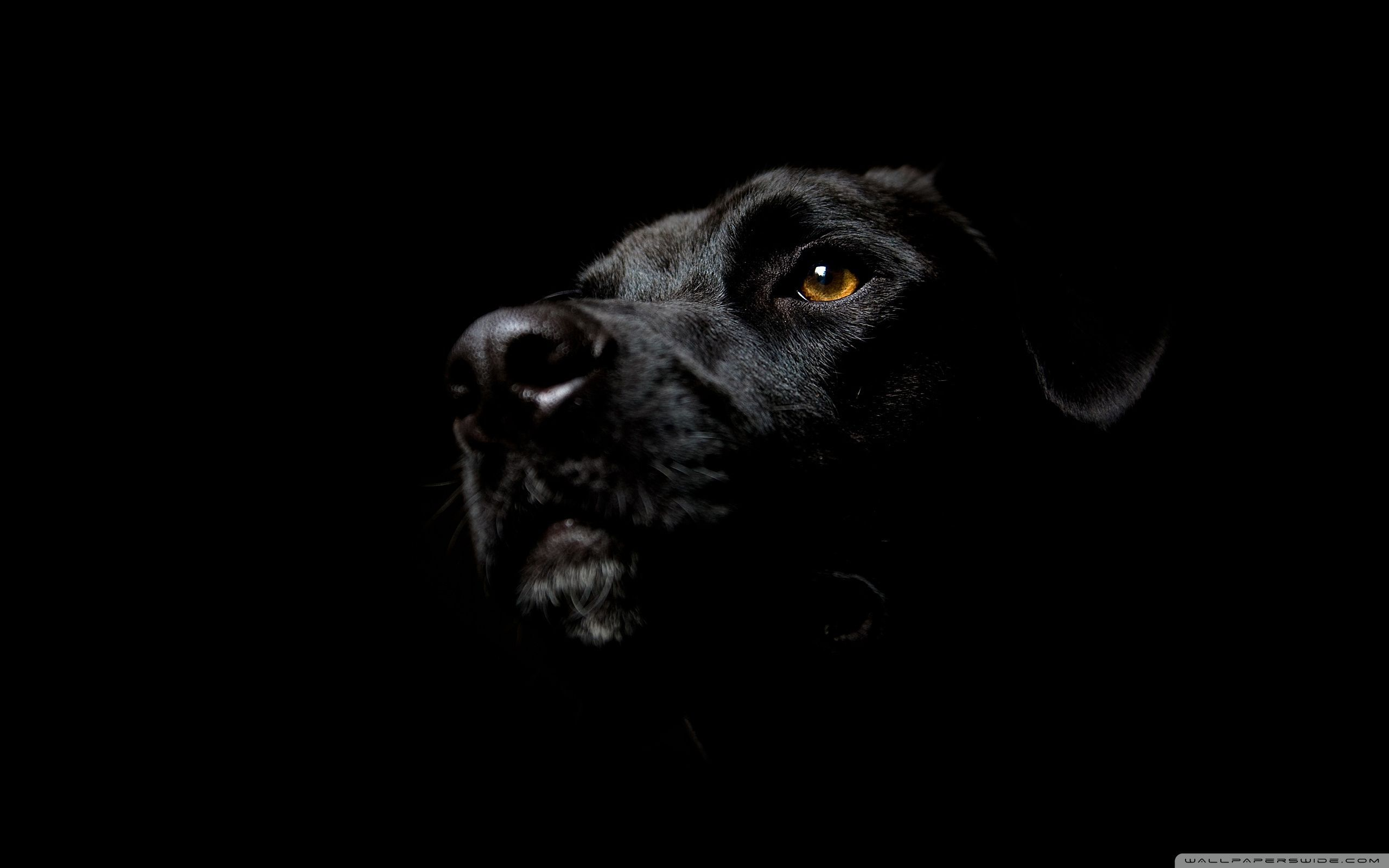 Black Dog Wallpapers Top Free Black Dog Backgrounds Wallpaperaccess