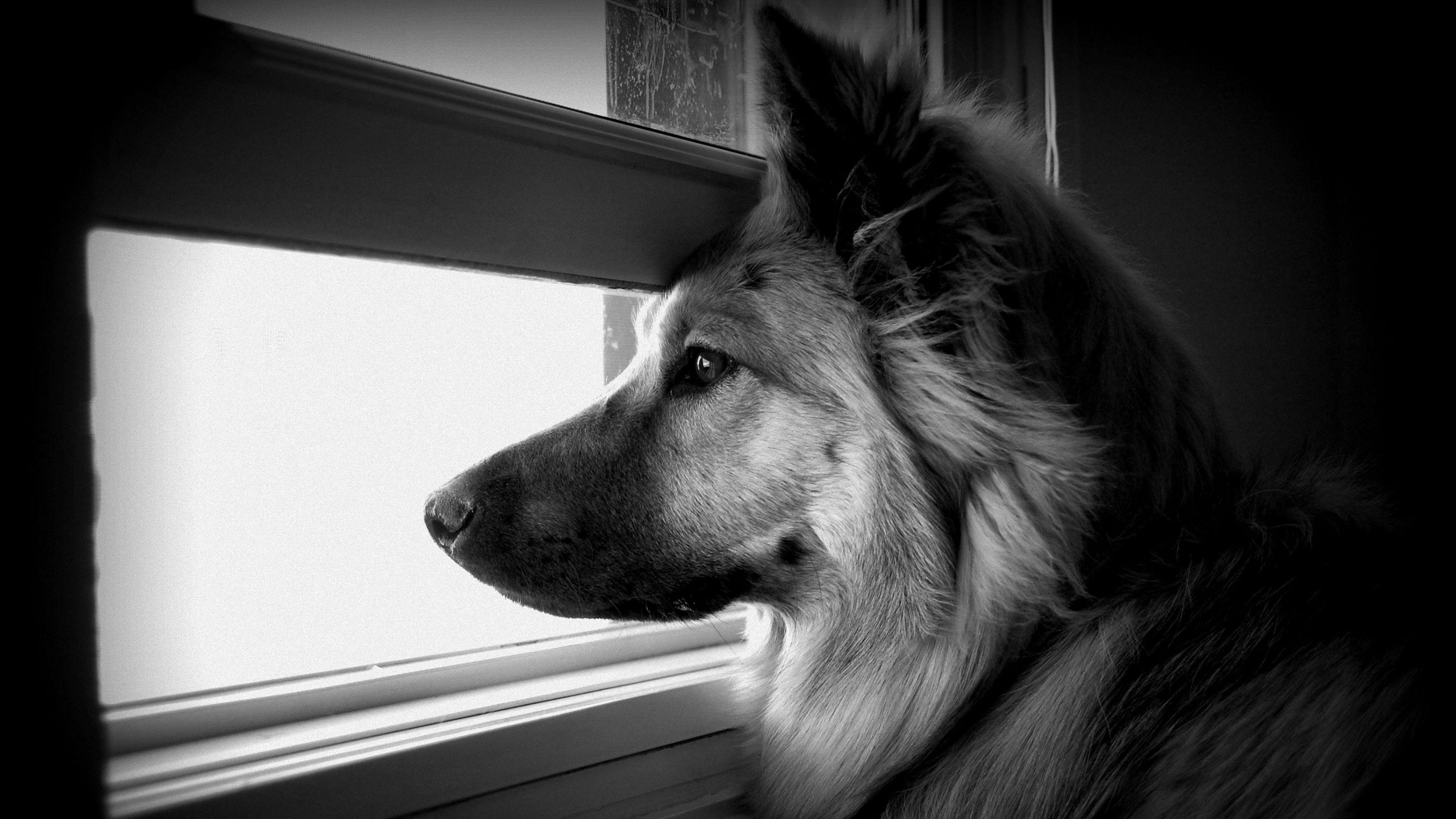 Luxo pra cachorro