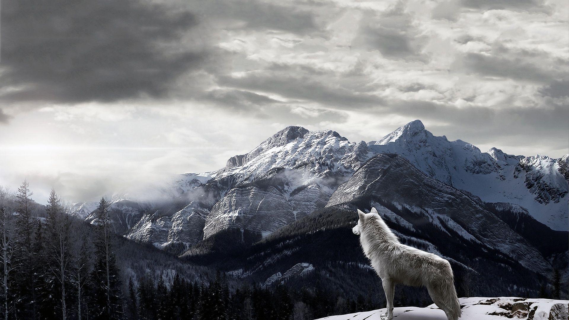 Full HD p Wolf Wallpapers Desktop Images k Free Download rh