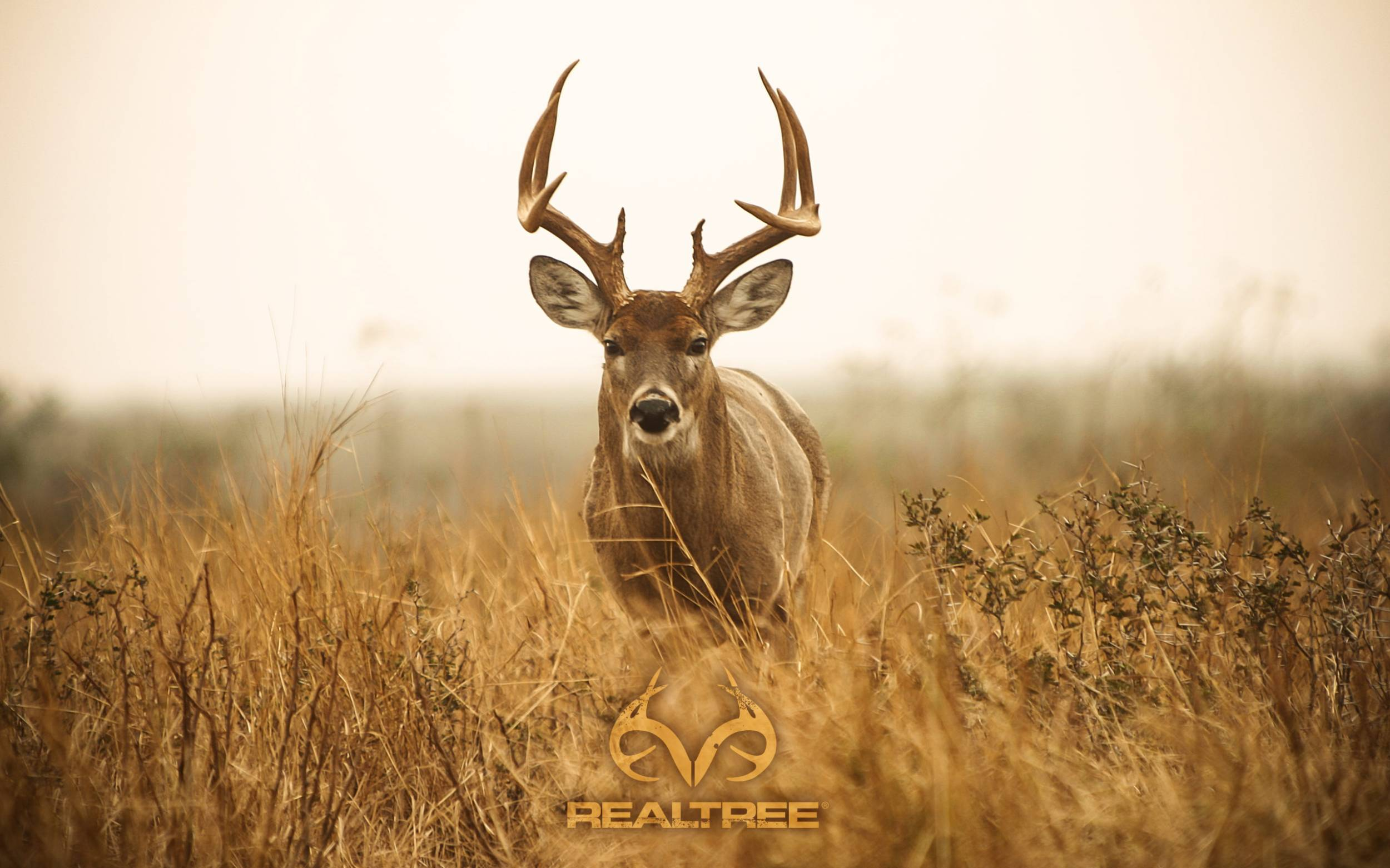 "2500x1562 Full HD Realtree Wallpaper for mobile and desktop""> · Download · 1500x1500 Realtree Wallpaper ..."