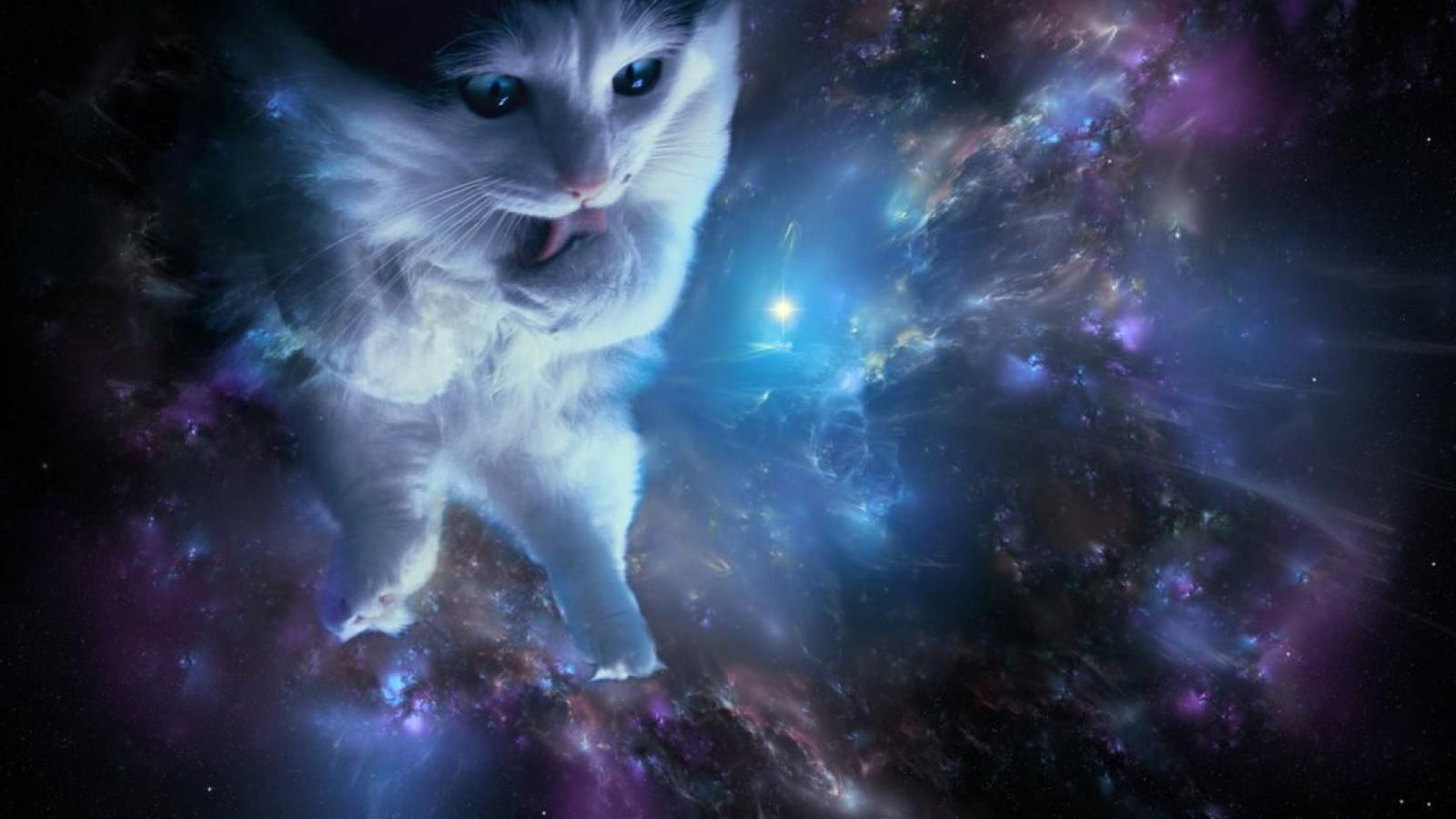 Cats In Space Wallpapers Top Free Cats In Space