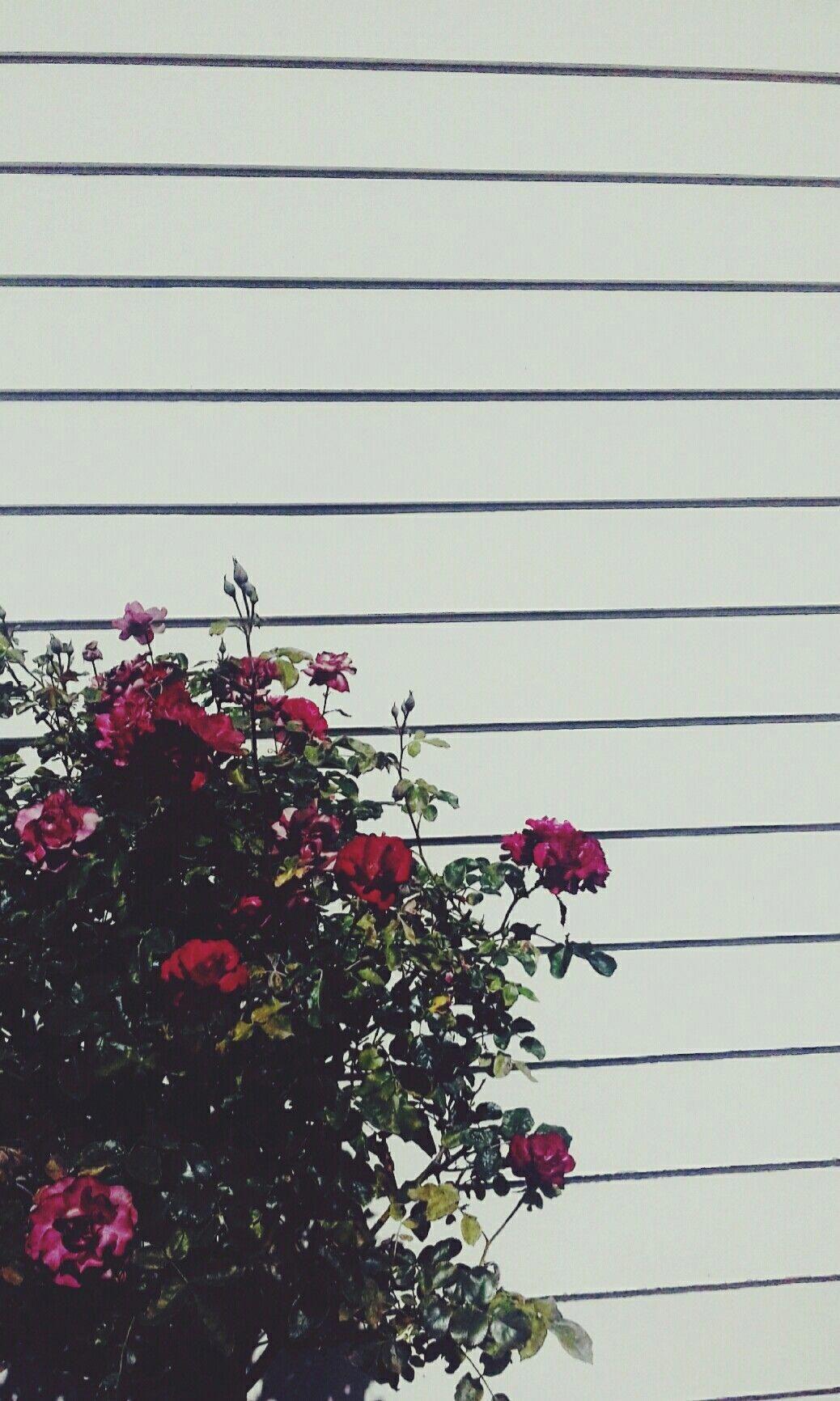 Grunge Tumblr Aesthetic Flower Wallpapers Top Free Grunge Tumblr Aesthetic Flower Backgrounds Wallpaperaccess