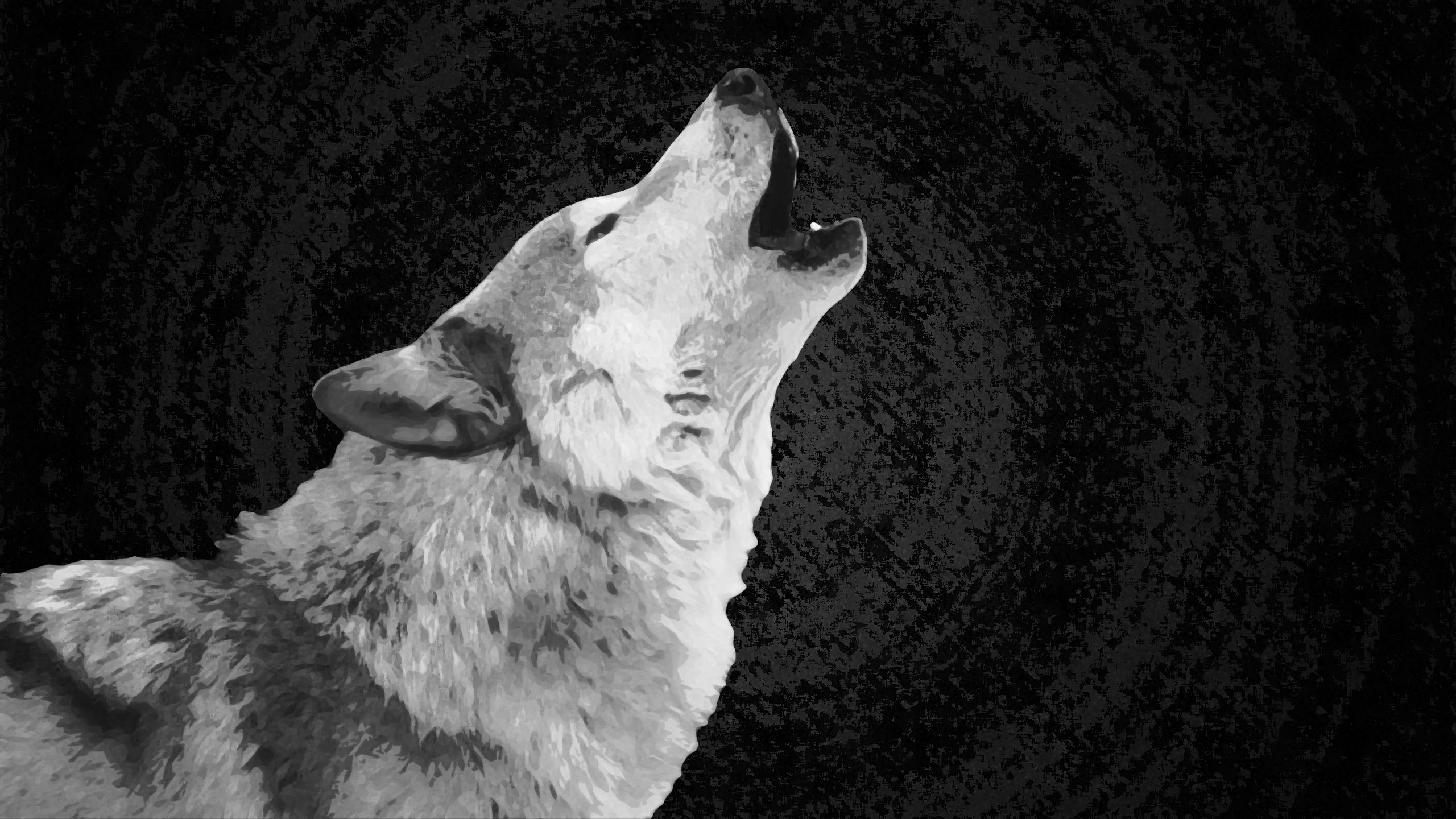 2560x1440 beautiful black and white wolf wallpaper the black posters