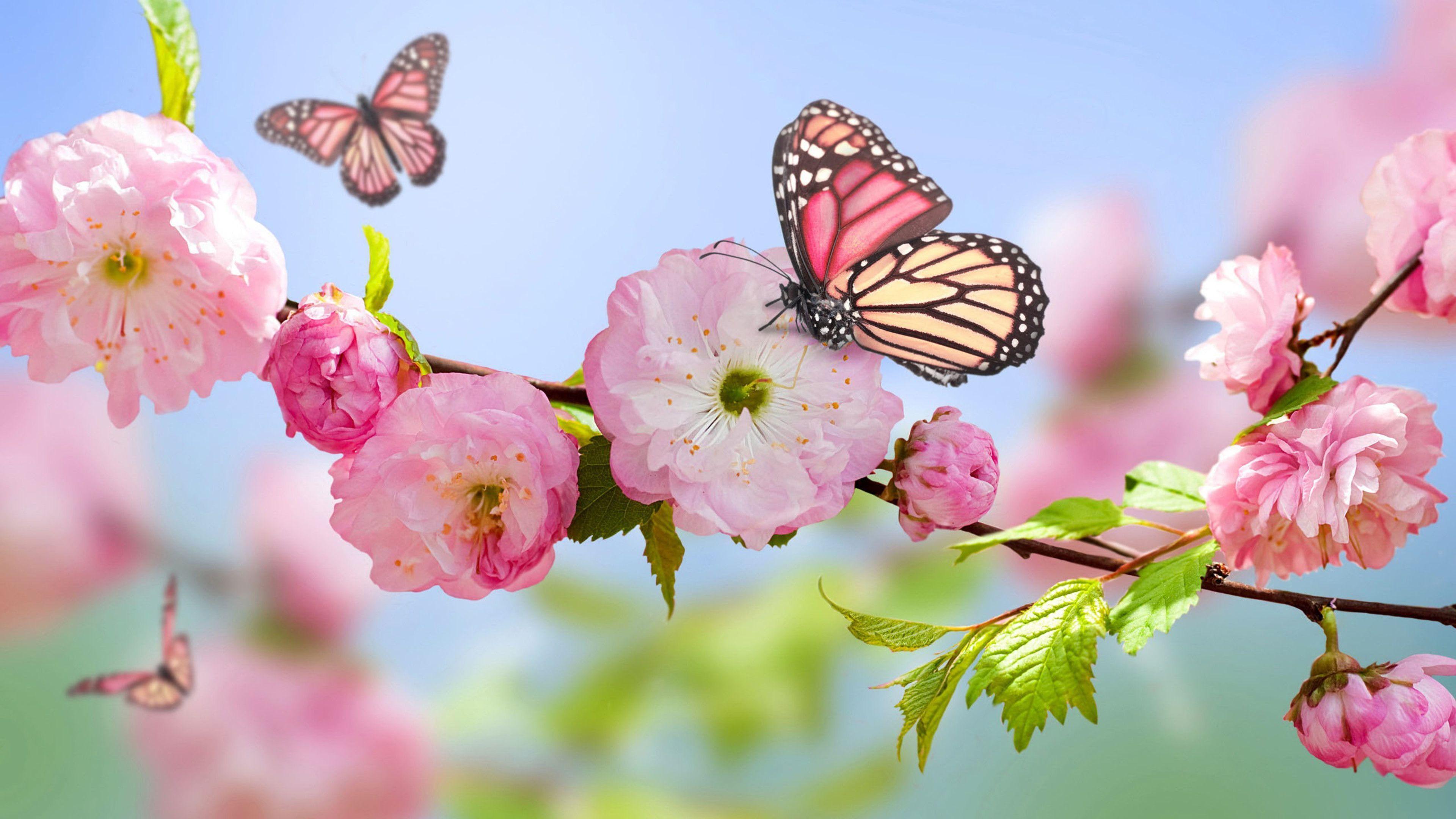 Pink Butterfly Desktop Wallpapers Top Free Pink Butterfly Desktop Backgrounds Wallpaperaccess