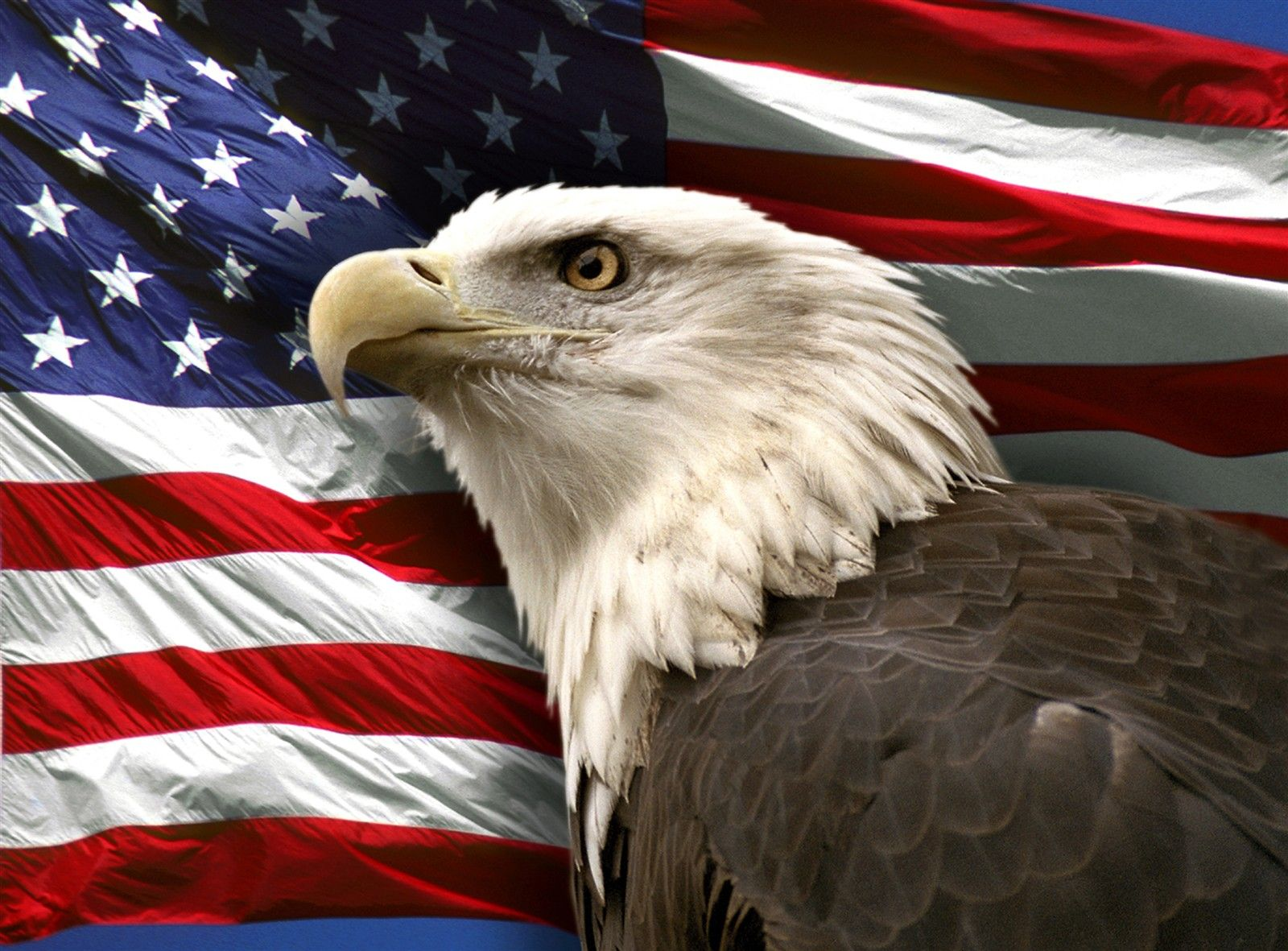 Patriotic Bald Eagle Wallpapers Top Free Patriotic Bald Eagle