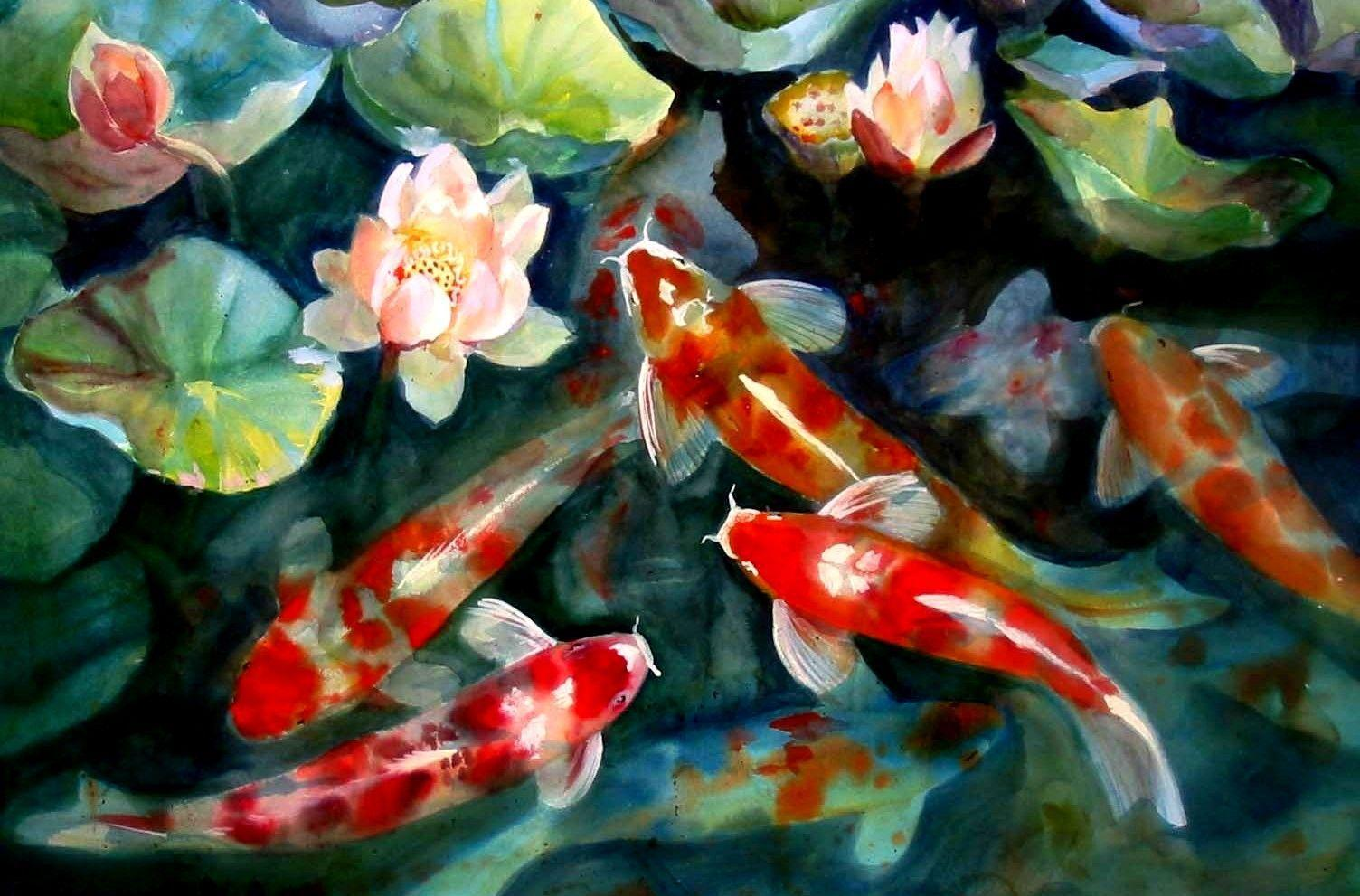Koi Fish Pond Wallpapers Top Free Koi Fish Pond Backgrounds