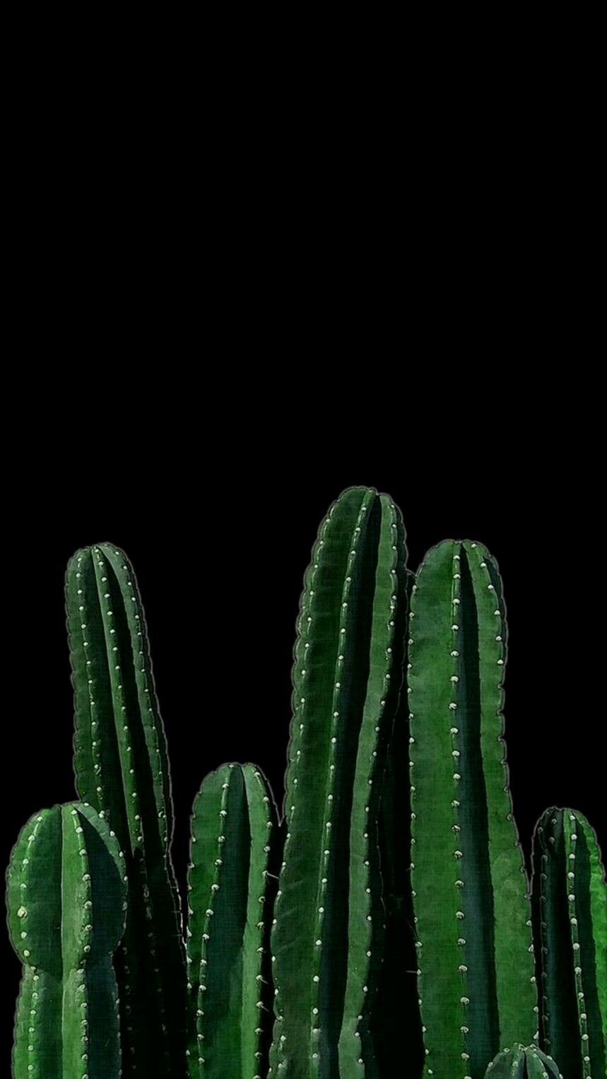 Black Cactus Wallpapers Top Free Black Cactus Backgrounds Wallpaperaccess