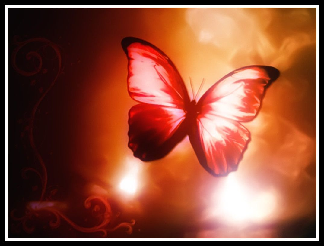 Red Butterfly Wallpapers Top Free Red Butterfly Backgrounds Wallpaperaccess