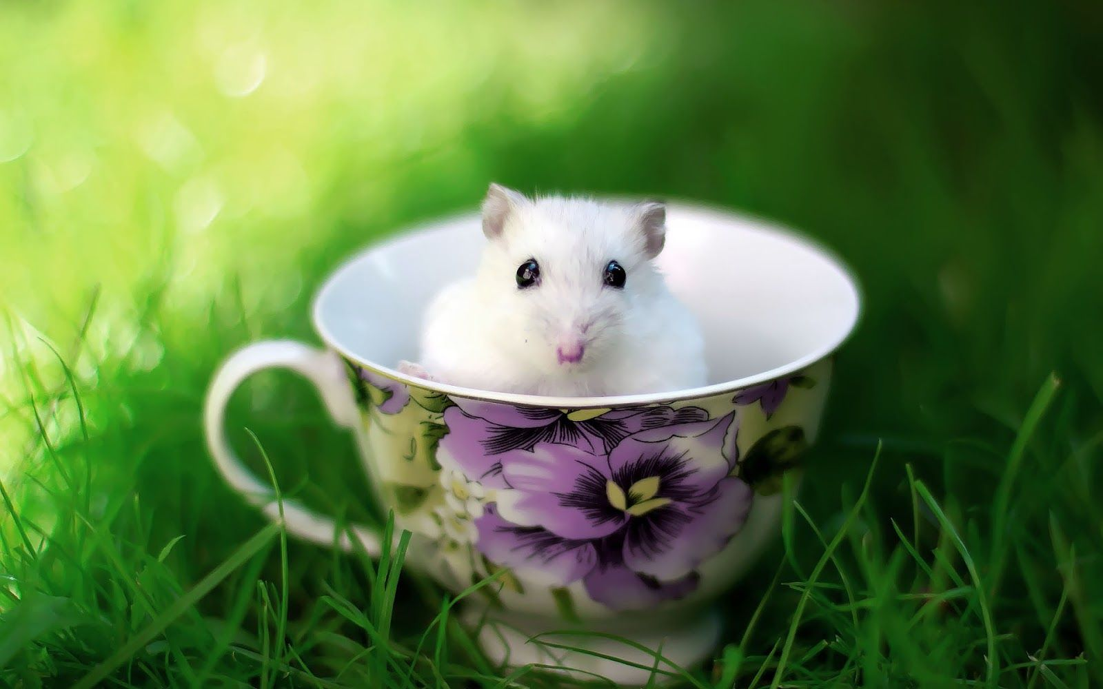 Funny Cute Animals Wallpapers Top Free Funny Cute Animals Backgrounds Wallpaperaccess