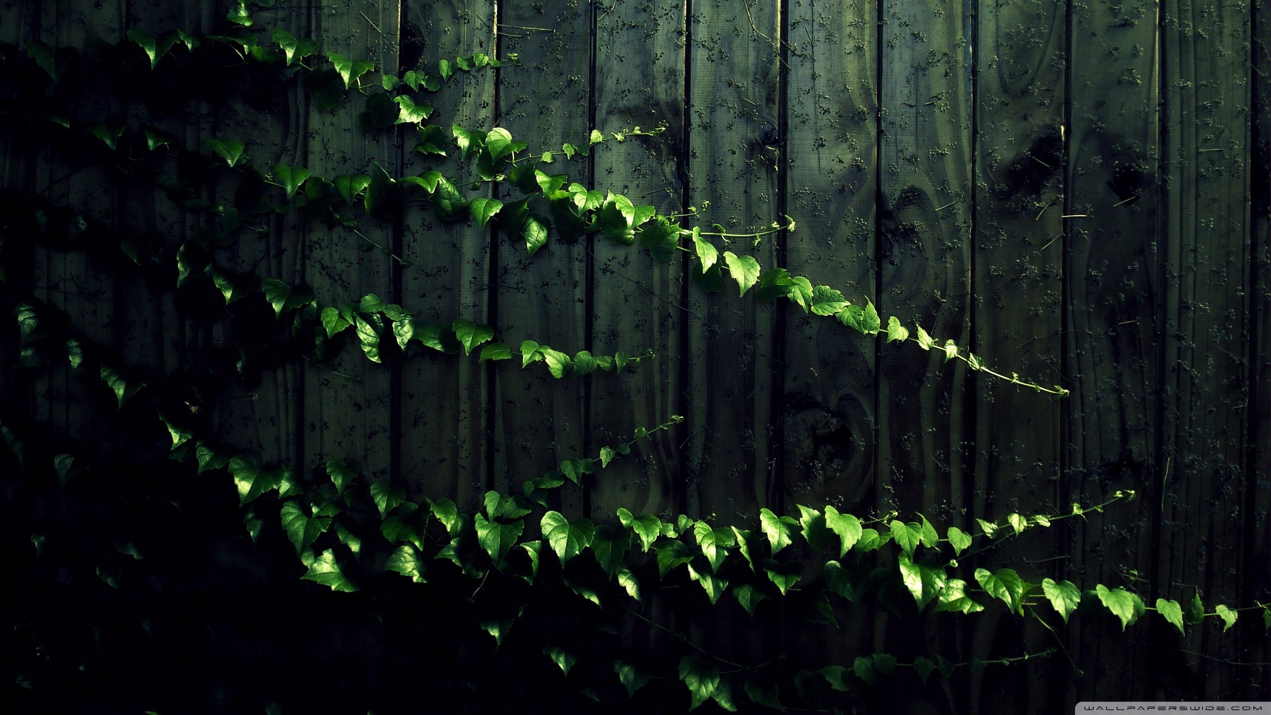 Plant Wallpapers Top Free Plant Backgrounds Wallpaperaccess