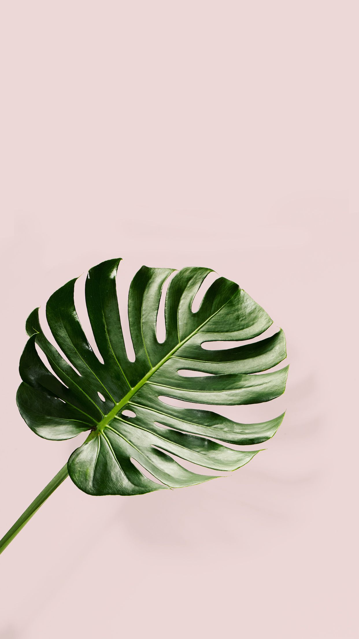 aesthetic grid plants wallpapers