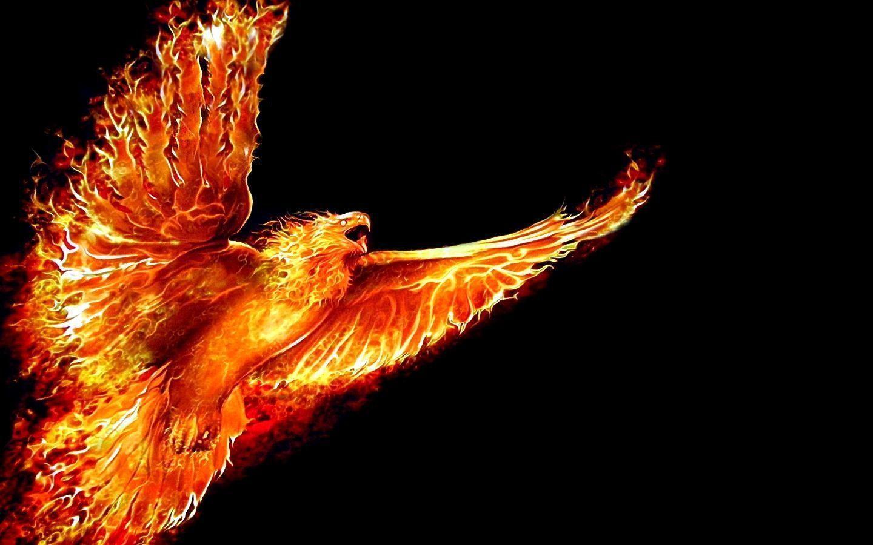 Phoenix Bird Wallpapers Top Free Phoenix Bird Backgrounds