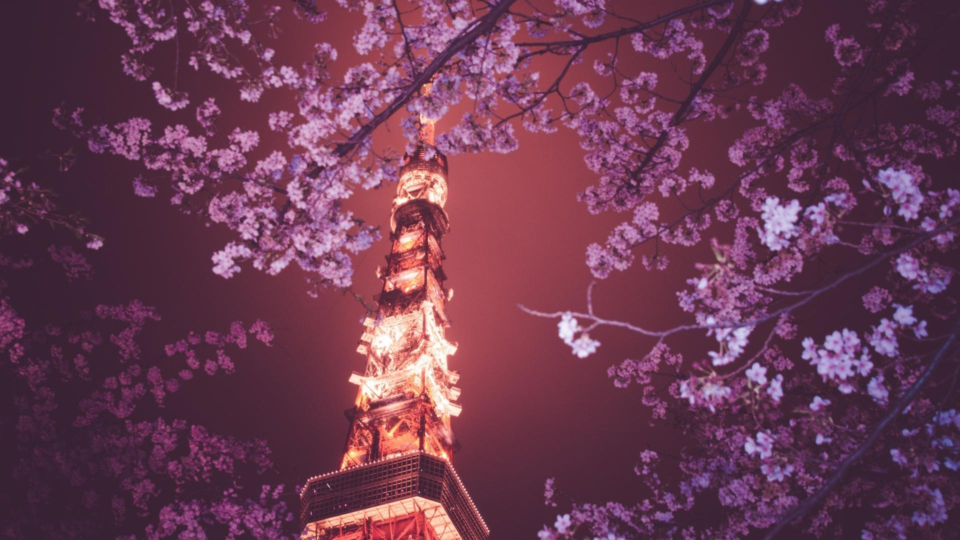 Japanese Cherry Blossom Laptop Wallpapers Top Free Japanese Cherry Blossom Laptop Backgrounds Wallpaperaccess