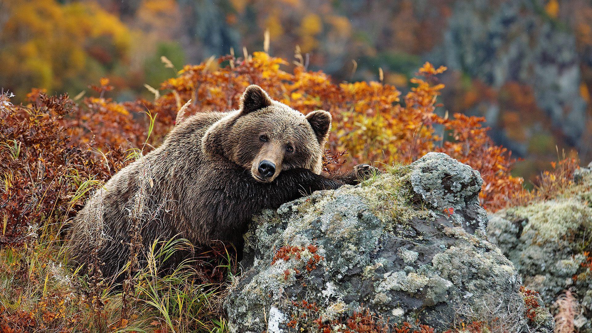 Autumn Bear Wallpapers - Top Free Autumn Bear Backgrounds - WallpaperAccess
