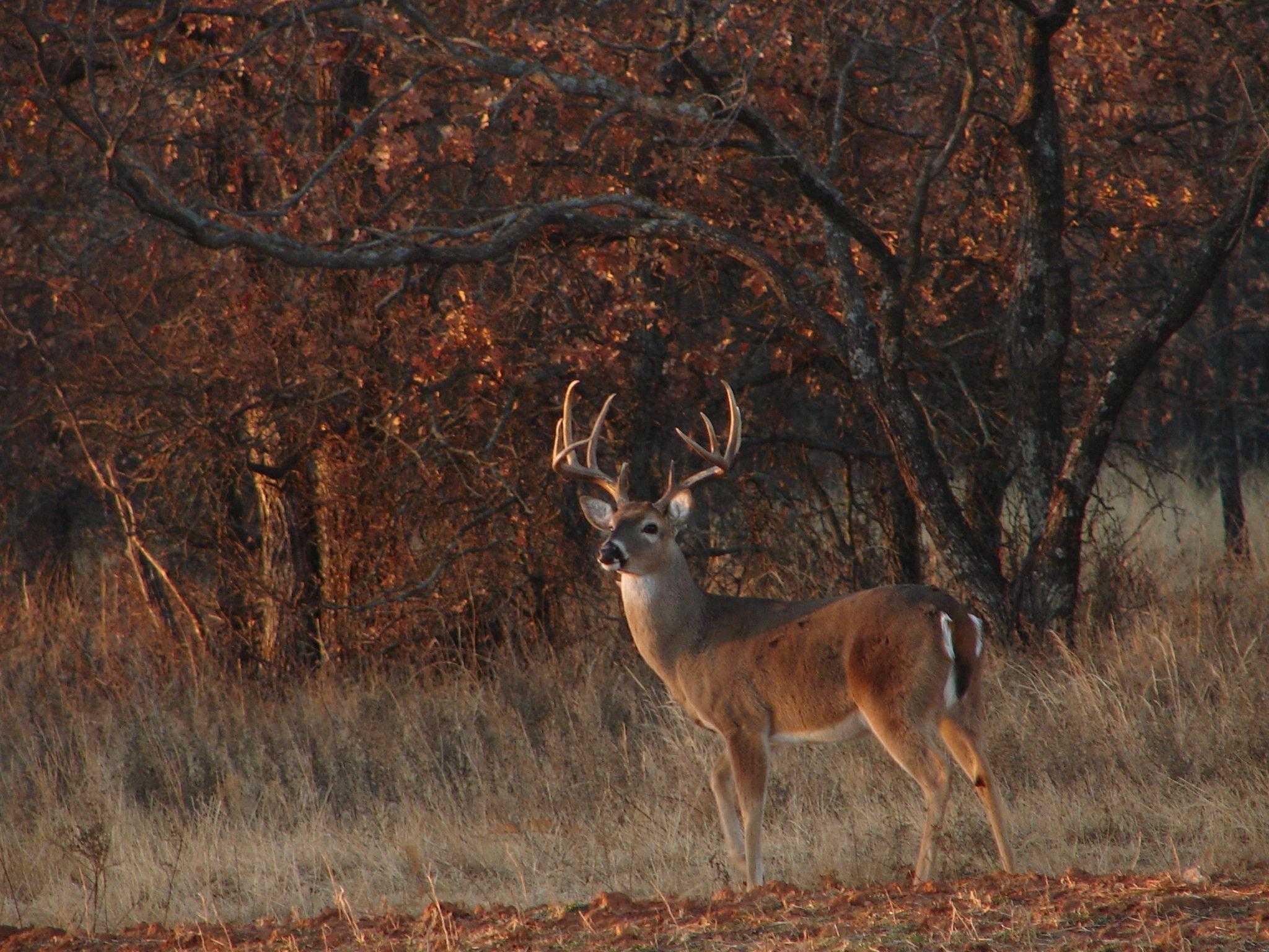 Deer Hunting Wallpapers Top Free Deer Hunting Backgrounds Wallpaperaccess