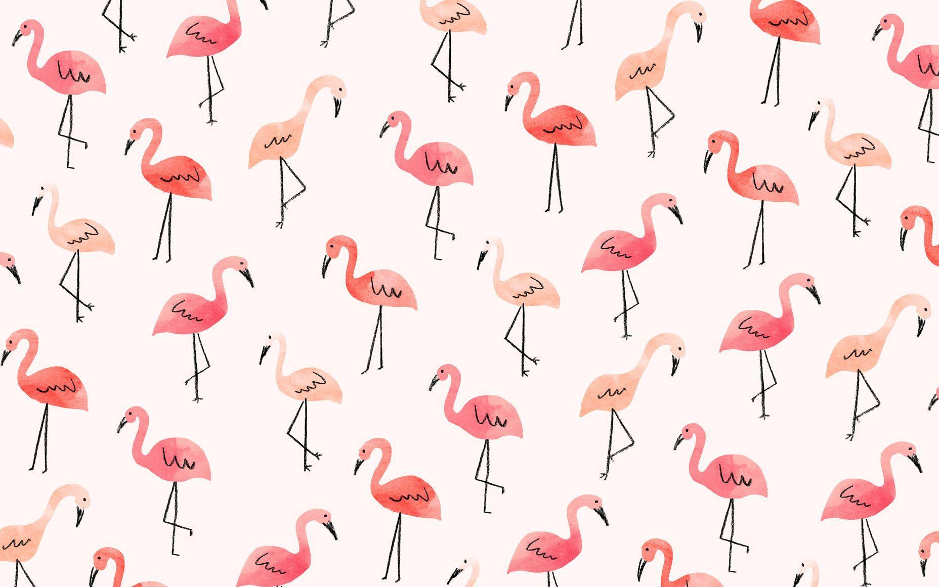 1856x1161 Resultado de imagen para flamingo hình nền.  Máy tính để bàn dễ thương