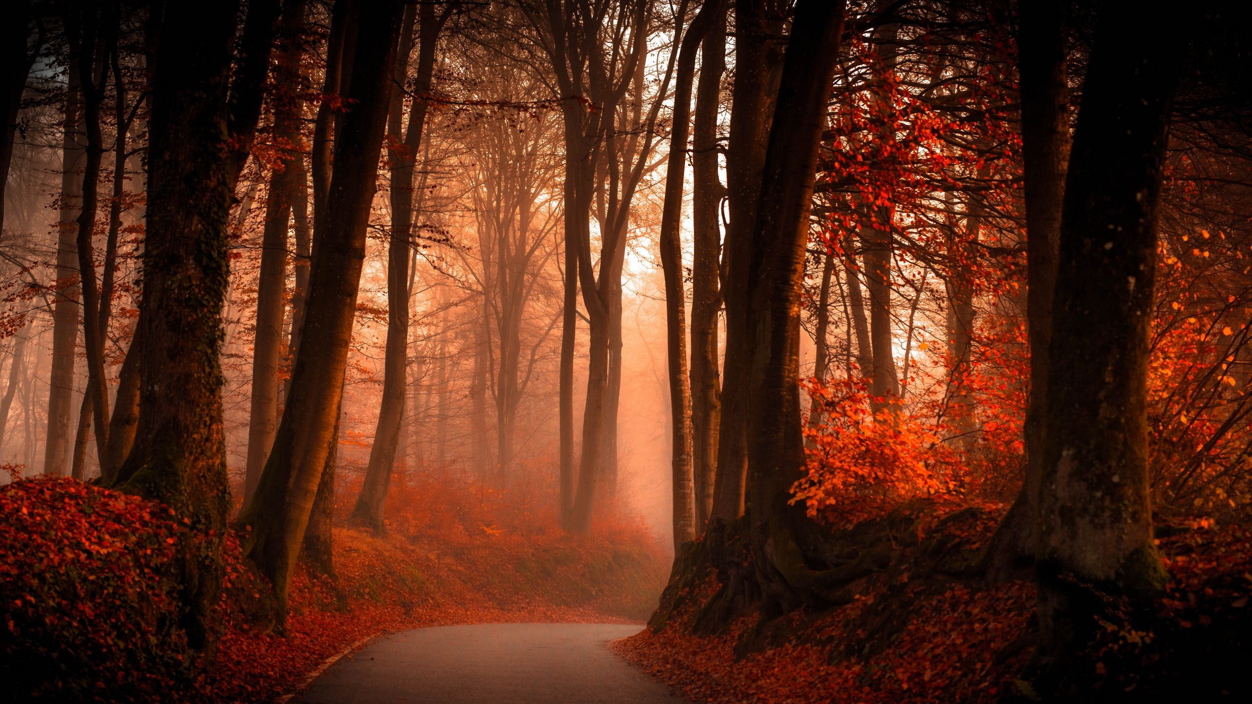 Autumn Forest Wallpapers Top Free Autumn Forest