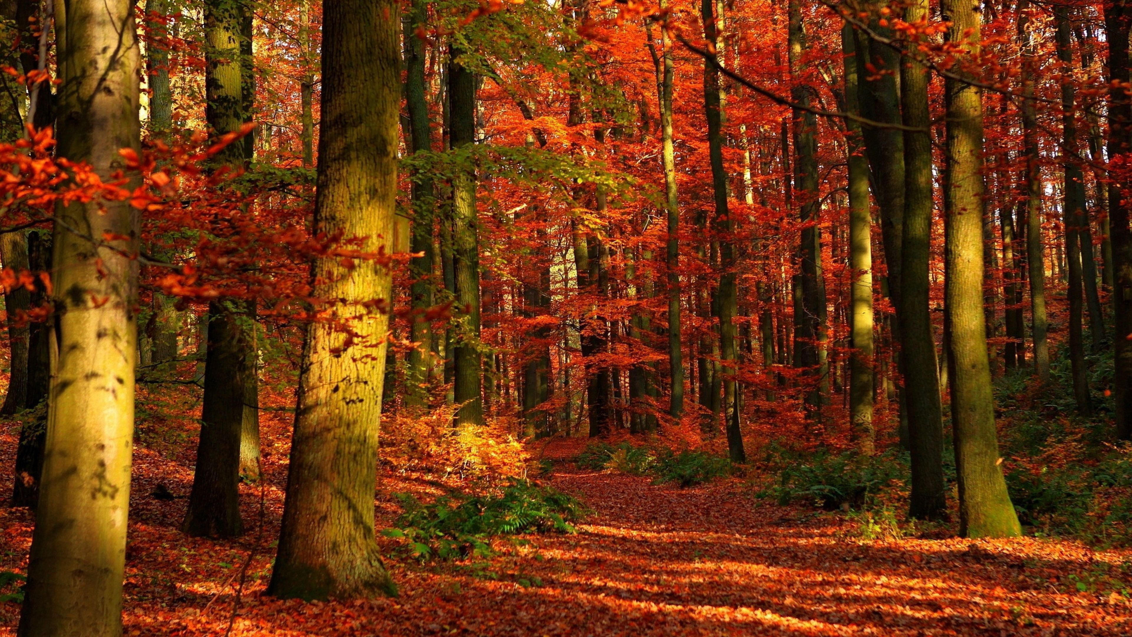 Ultra Hd Autumn Wallpapers Top Free