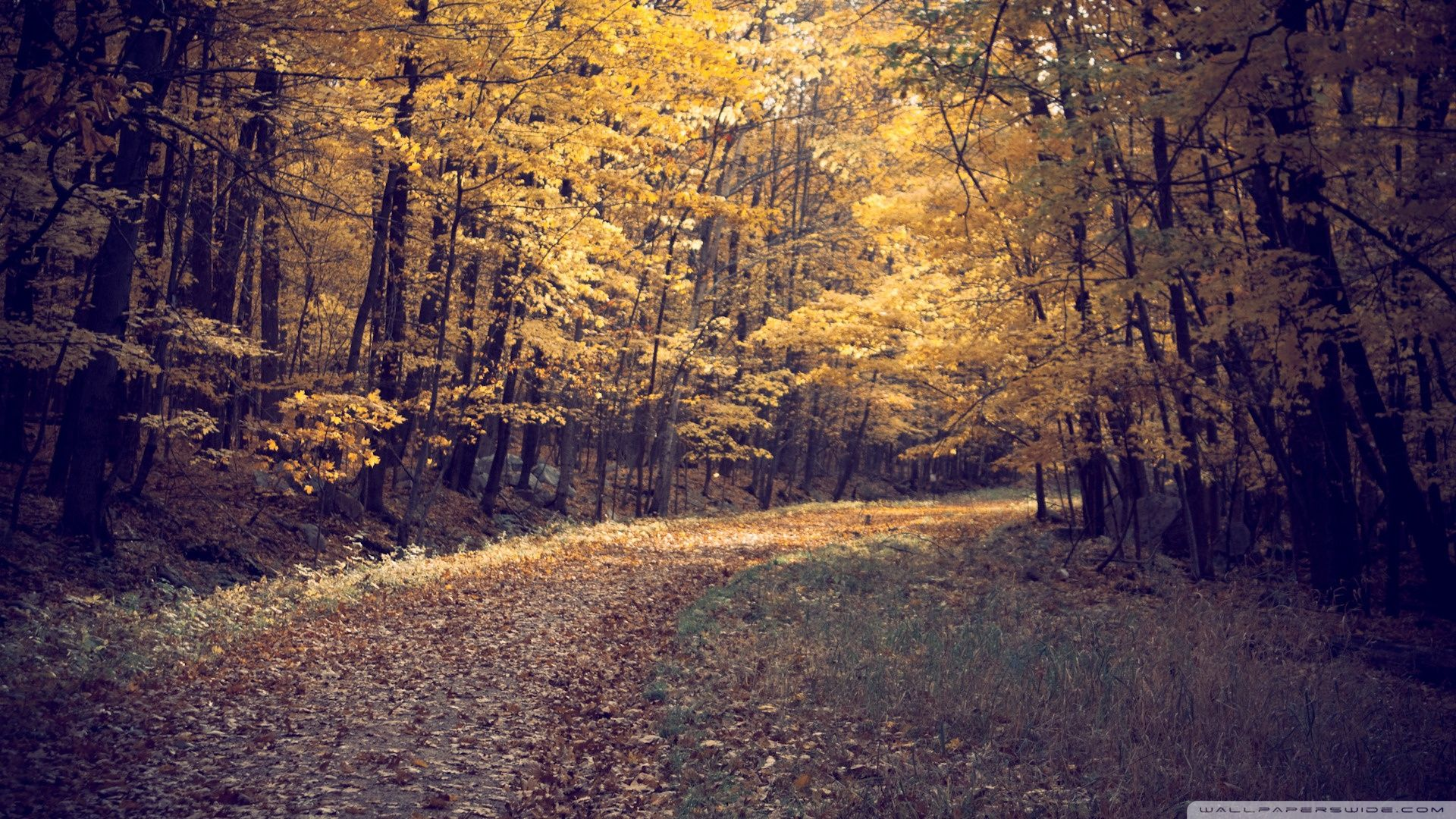 55 best free autumn forest wallpapers wallpaperaccess