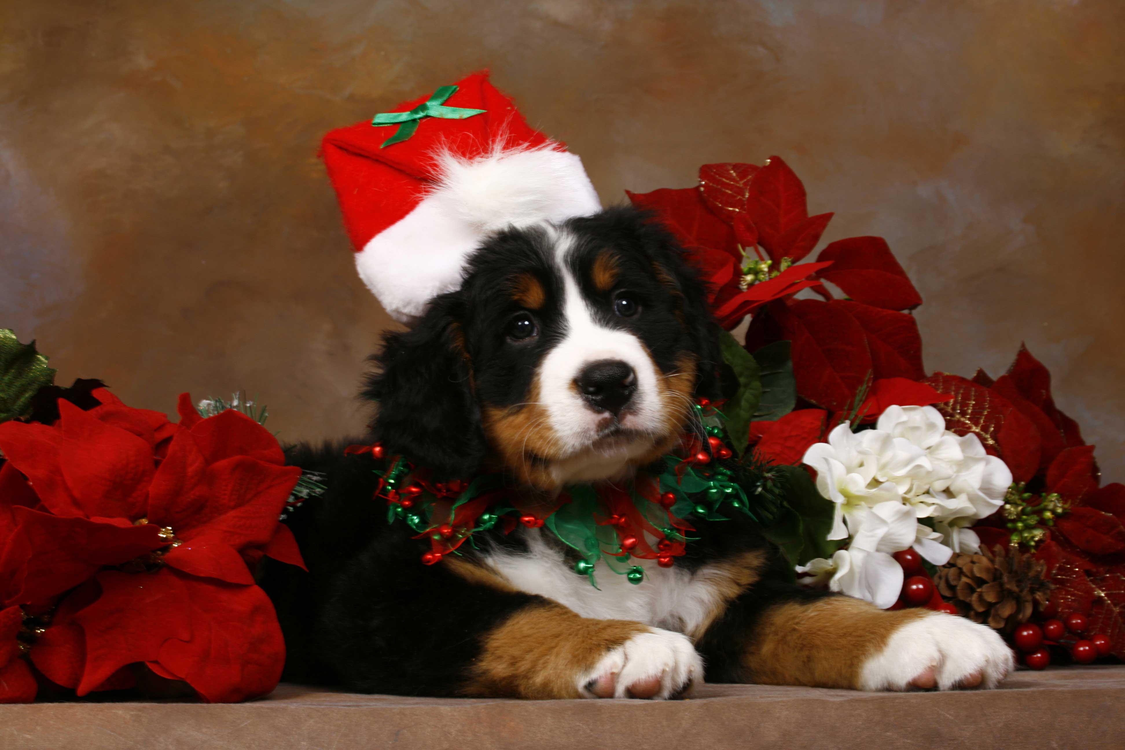 Cute Christmas Animal Wallpapers - Top Free Cute Christmas ...