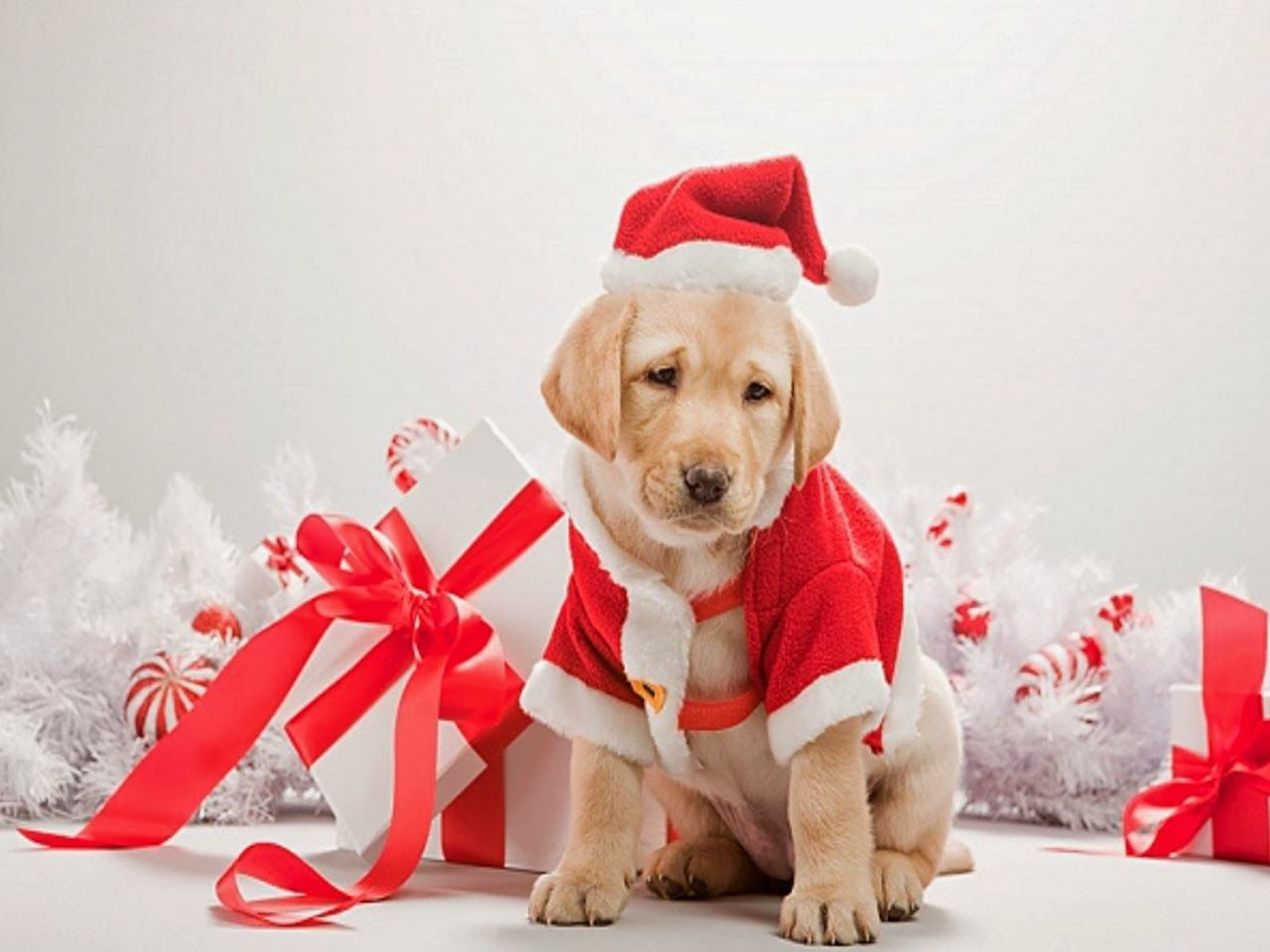 Cute Christmas Puppies.Cute Christmas Animal Wallpapers Top Free Cute Christmas