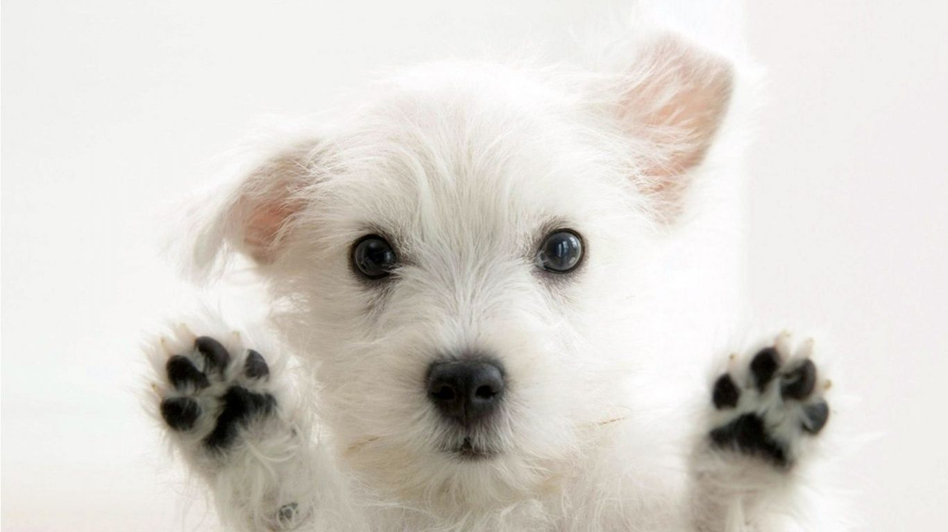 Funny Dog Wallpapers Top Free Funny Dog Backgrounds