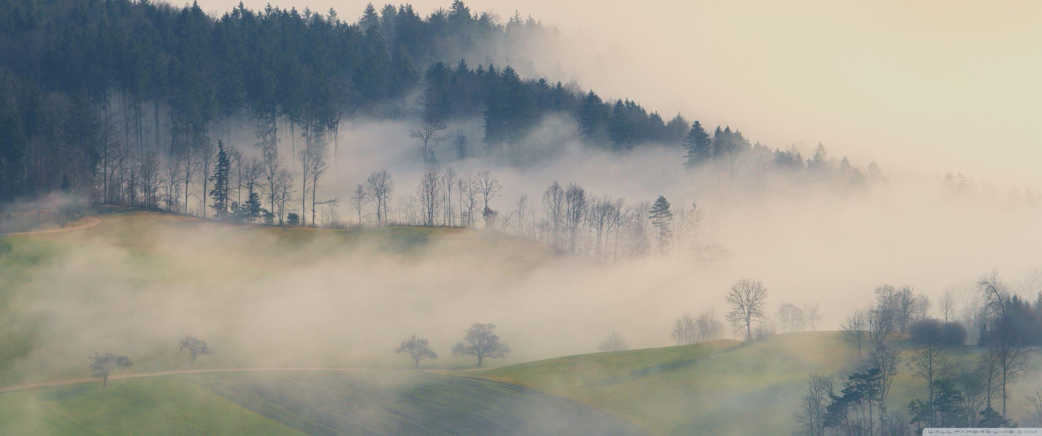 Misty Deer 4k Hd Desktop Wallpaper For 4k Ultra Hd Tv: Top Free Fog Backgrounds
