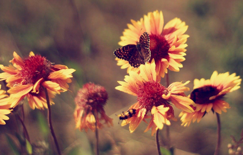 Hình nền máy tính cổ điển hình nền con bướm 1332x850
