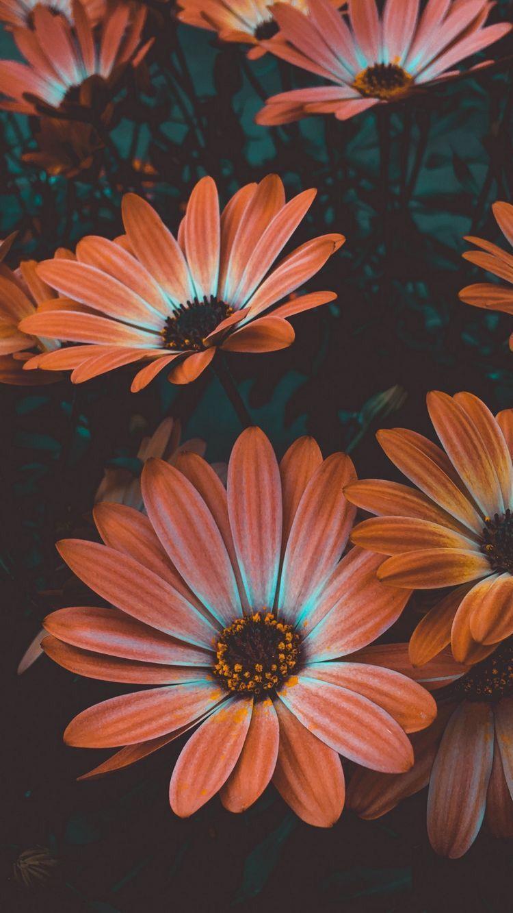 Hình nền 750x1333 cho iPhone X. Nhấp vào liên kết bên dưới để cập nhật Tiện ích Tech News N.  Hình nền hoa đẹp, Hình nền hoa, Hình nền hoa
