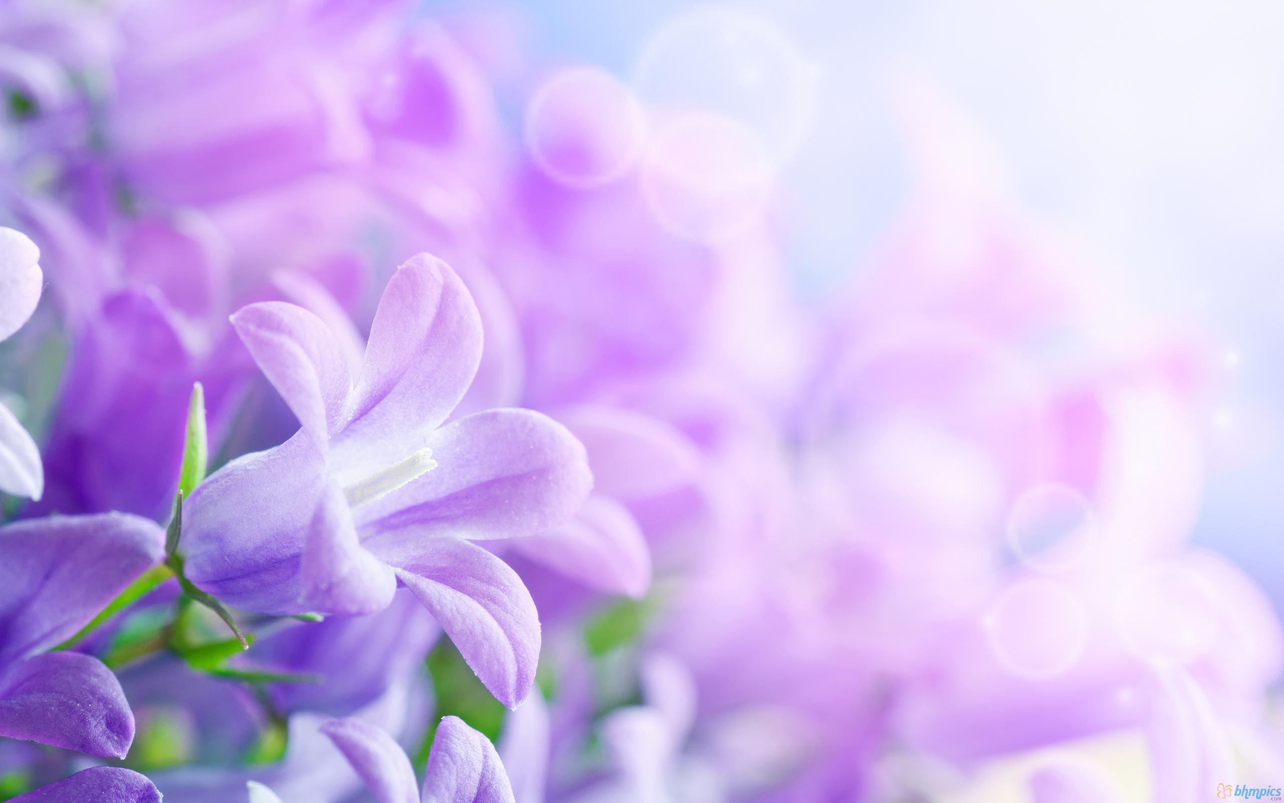 2560x1600 Hoa Nền.  Hình nền hoa đẹp, Hình nền hoa đẹp và Hình nền hoa tuyệt vời