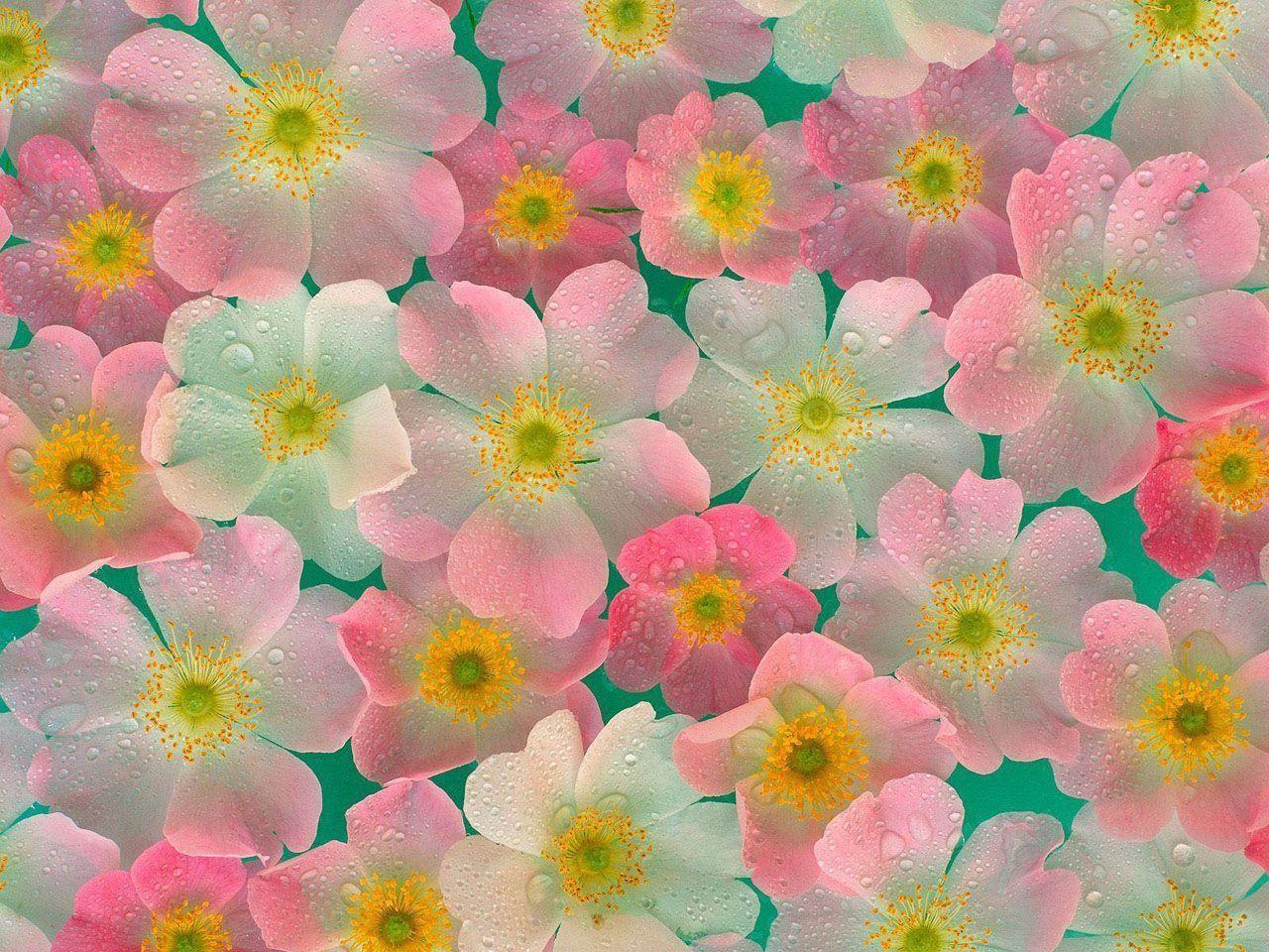 Hình nền hoa đẹp 1280x960 cho máy tính để bàn của bạn