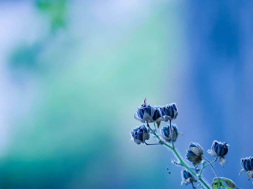 1024x768 Hình nền thư giãn màu xanh lam.  Hình nền màu xanh, Hình nền màu xanh dễ thương và Hình nền Giáng sinh xanh