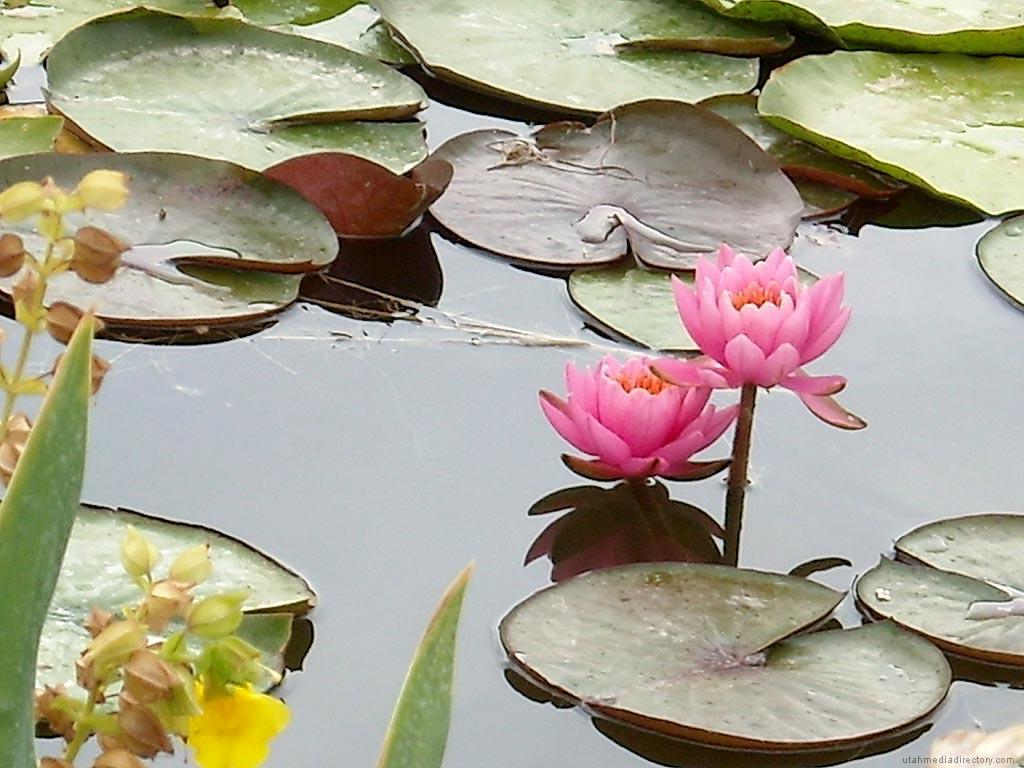 Hình nền hoa độc đáo 1024x768