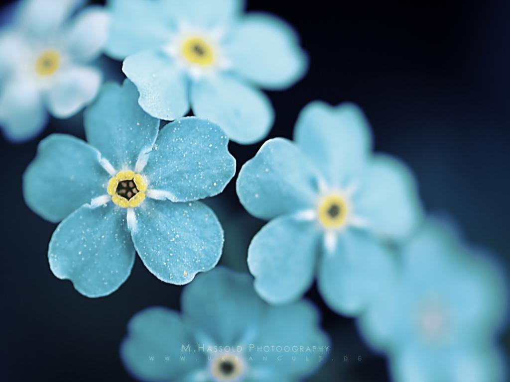 Hình nền hoa đẹp 1024x768