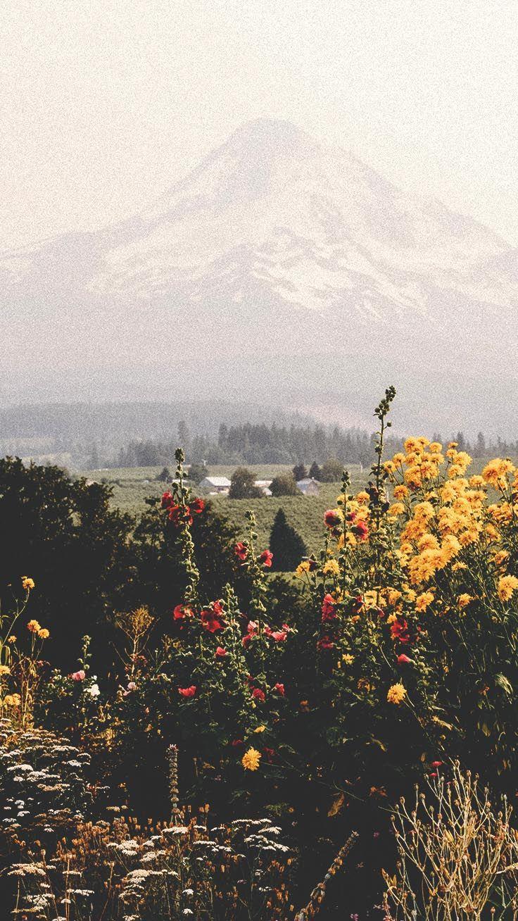 Hình Nền Thiên Nhiên 736x1308 Hình Nền iPhone By Preppy Hình Nền - Hình Nền Hoa Núi iPhone - Hình Nền 736x1308 - teahub.io