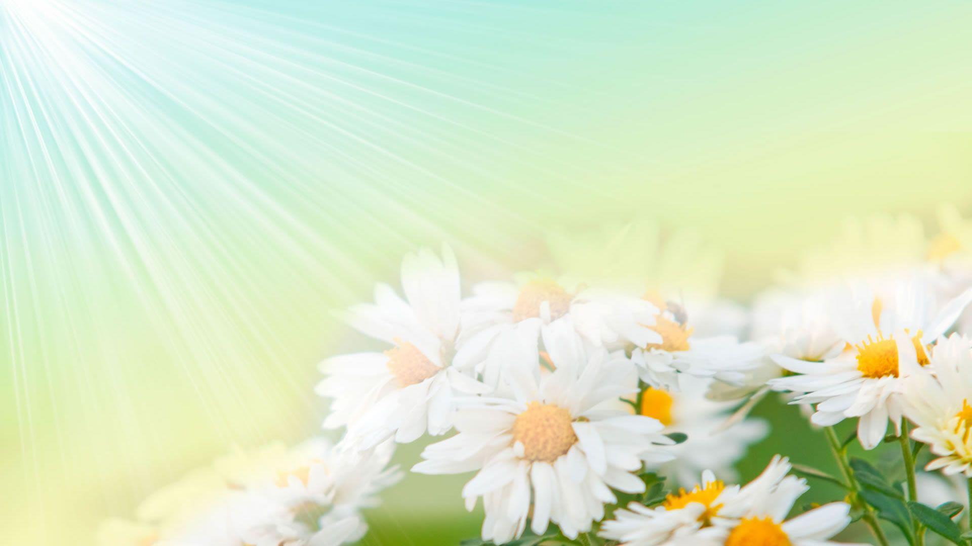 Hình nền hoa đẹp 1920x1080