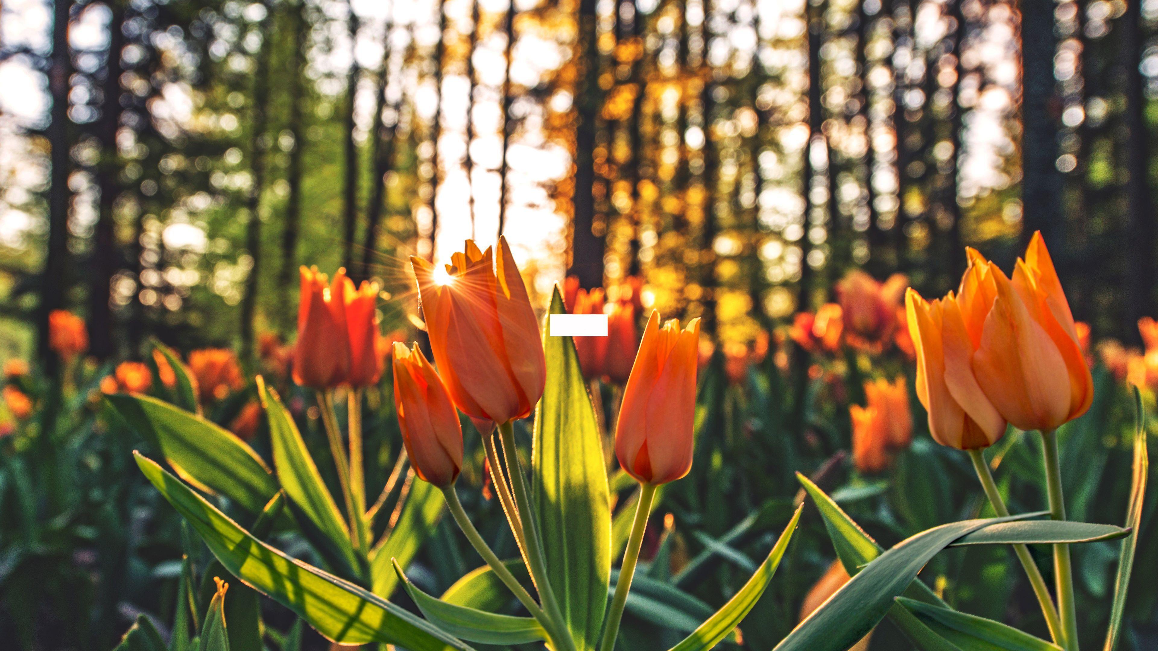 3840x2160 Nền hoa mát mẻ MIỄN PHÍ trong PSD.  AI