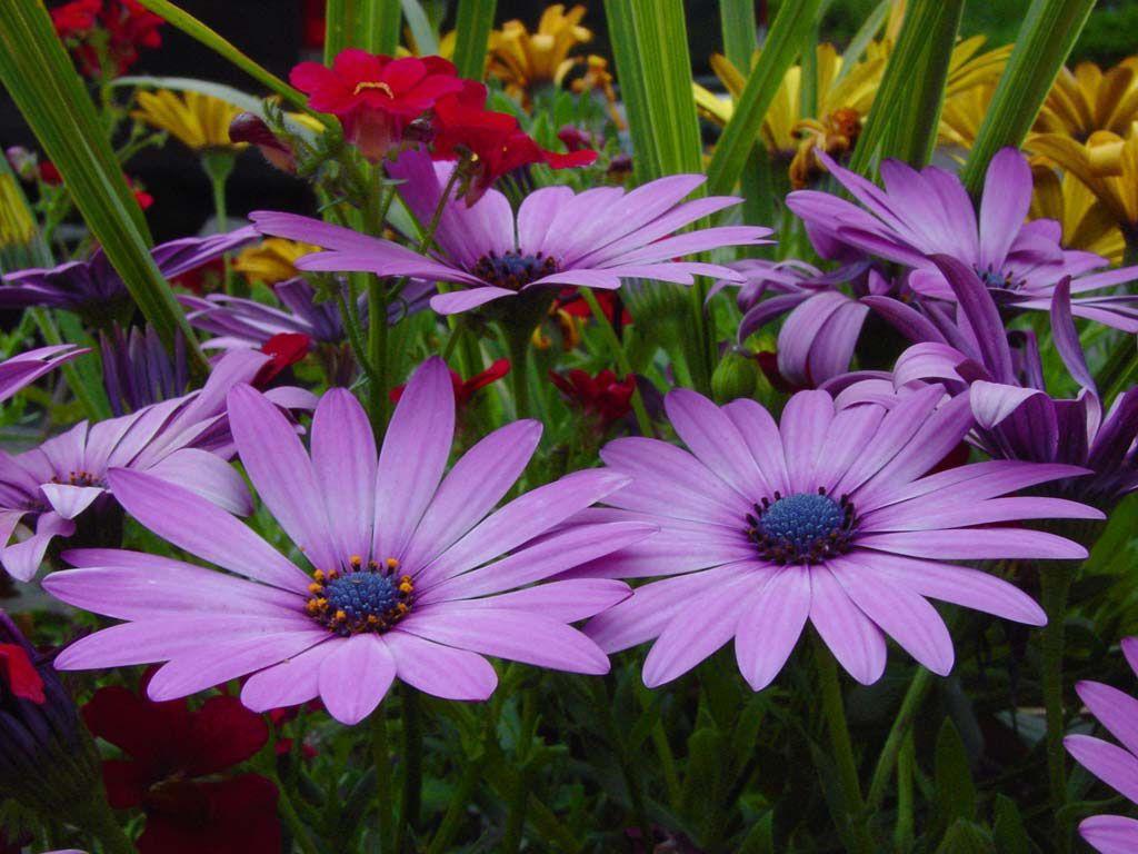 Hình nền hoa đẹp 1024x768 cho máy tính để bàn của bạn