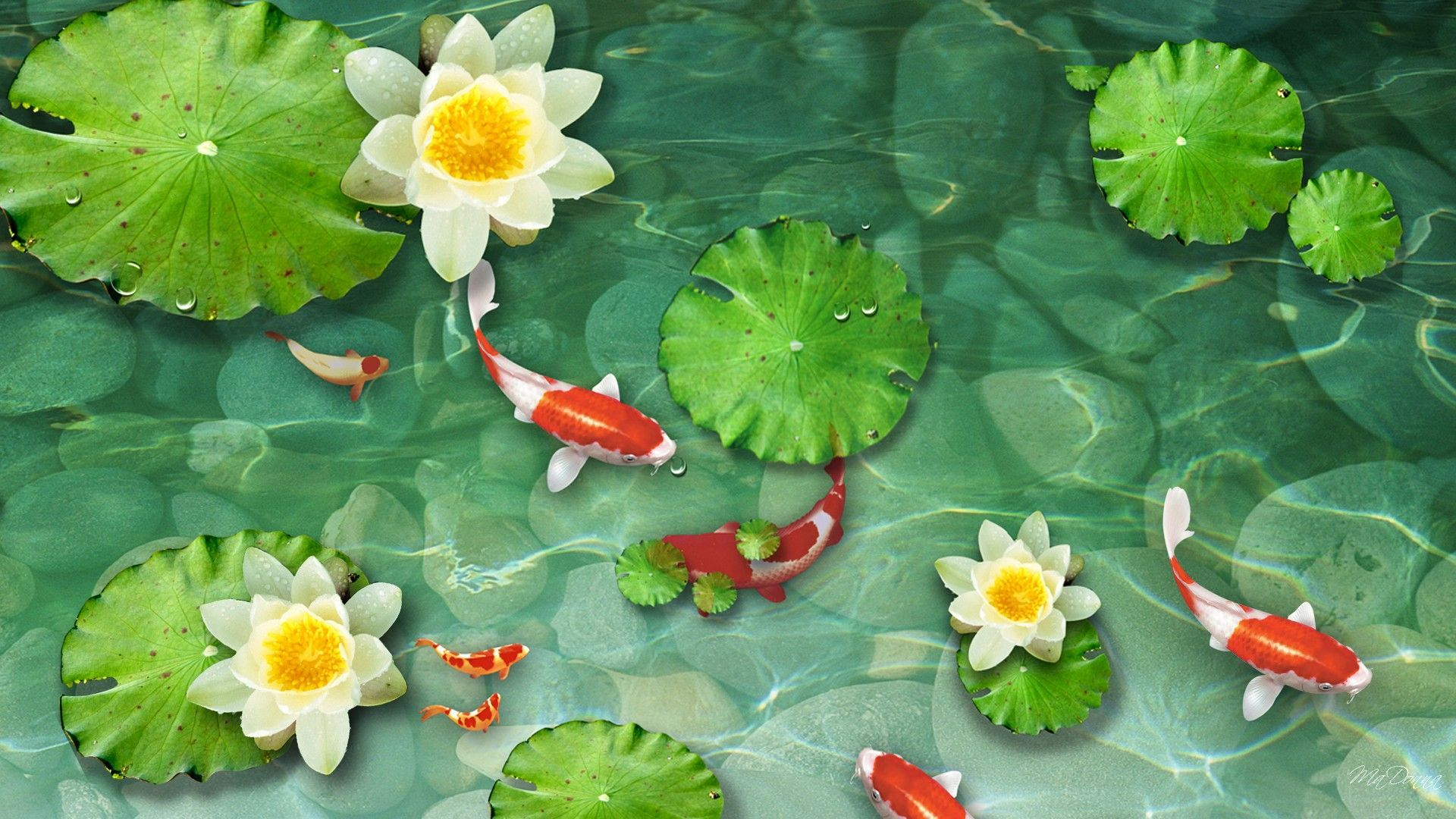 Green koi fish wallpapers top free green koi fish for Koi pond screensaver