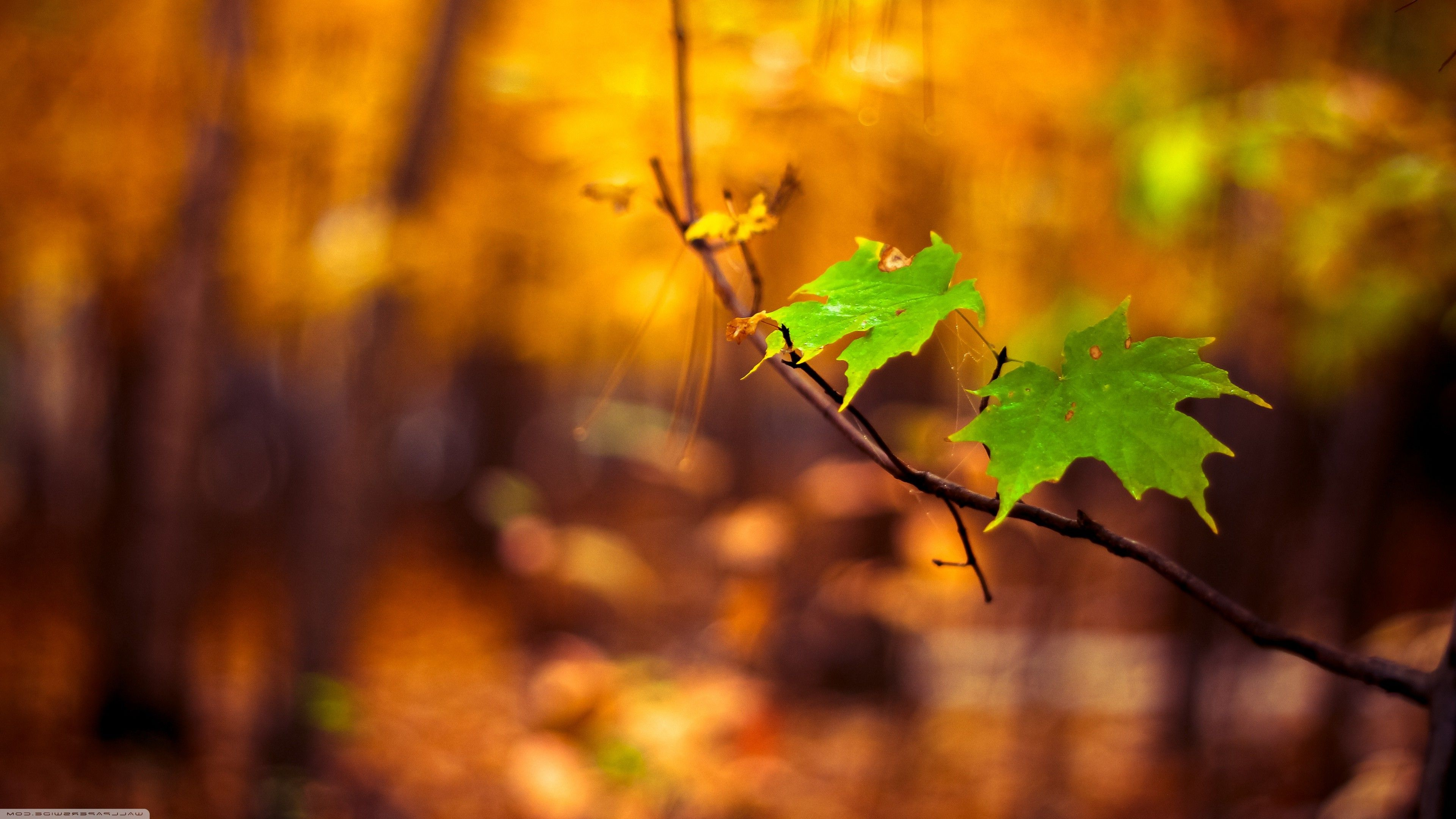 Nature Blur Wallpapers - Top Free ...