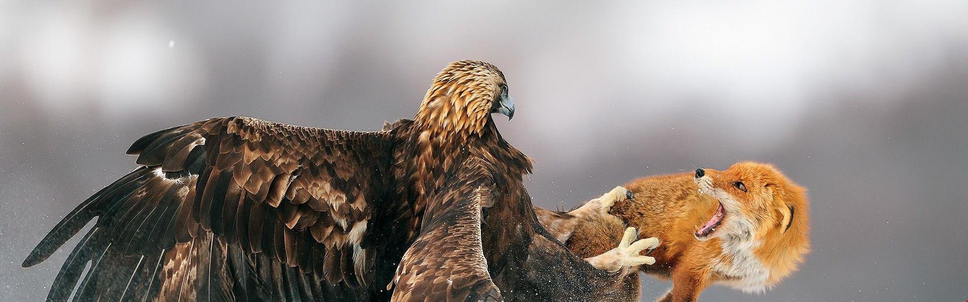 тоже картинки орел и лиса уверен, что