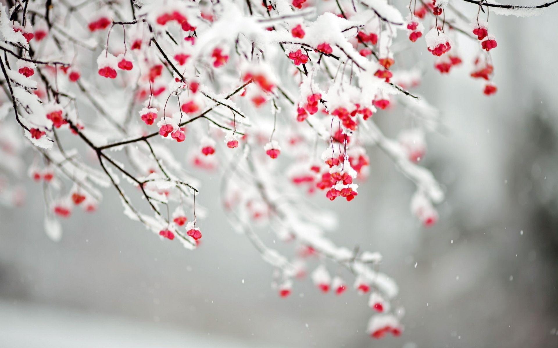 Flowers In Snow Desktop Wallpapers Top Free Flowers In Snow Desktop Backgrounds Wallpaperaccess