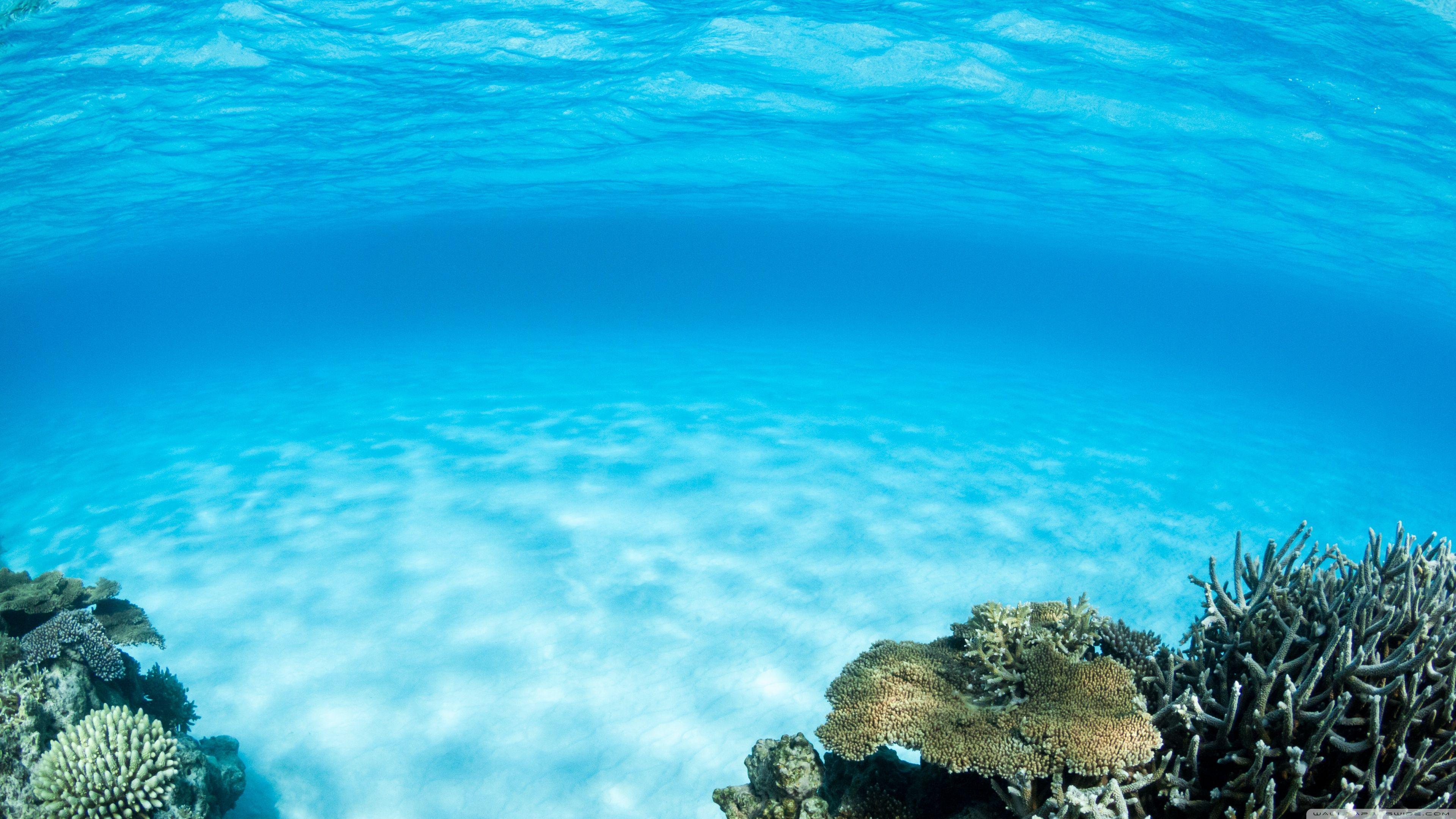 Hd underwater wallpapers top free hd underwater - Underwater desktop background ...