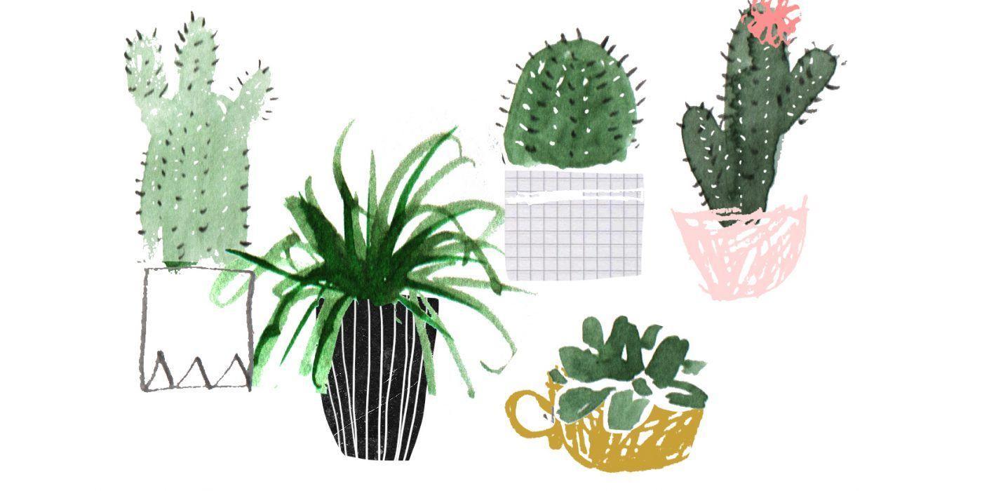 Succulent Aesthetic Desktop Wallpapers Top Free Succulent Aesthetic Desktop Backgrounds Wallpaperaccess