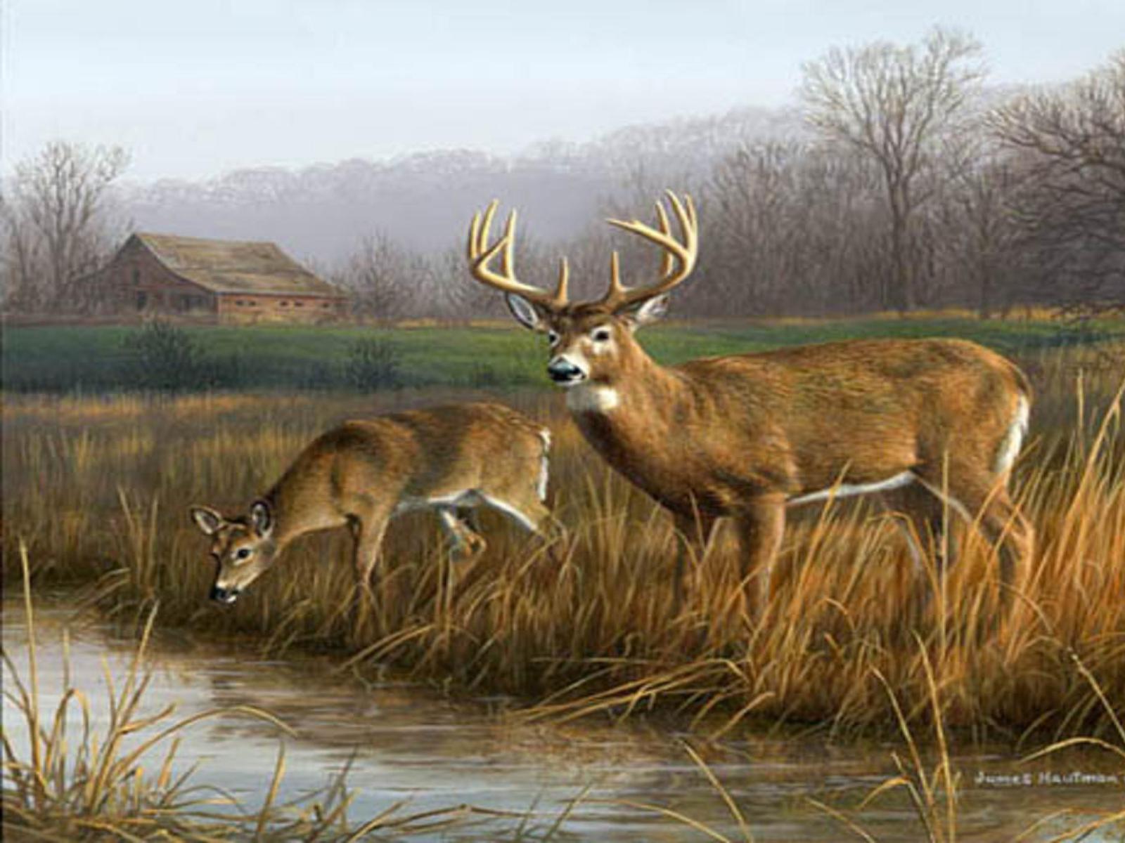 Deer Desktop Wallpapers Top Free Deer Desktop Backgrounds Wallpaperaccess